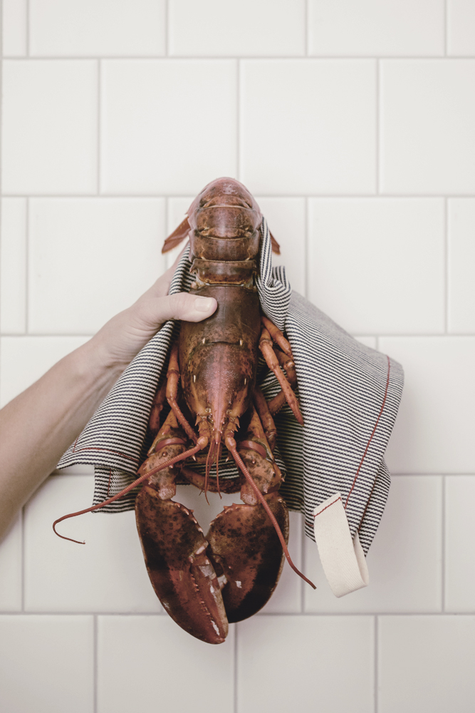 fresh steamed lobster in railroad stripe napkin / heirloomed