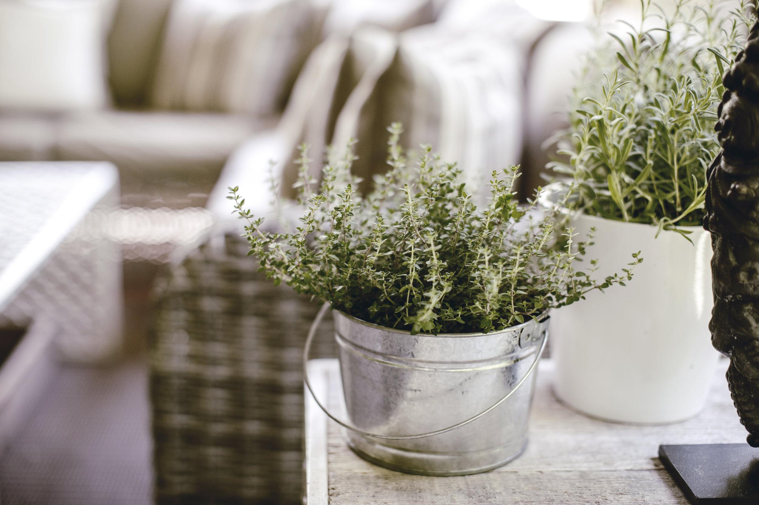 outdoor patio kitchen herbs / heirloomed