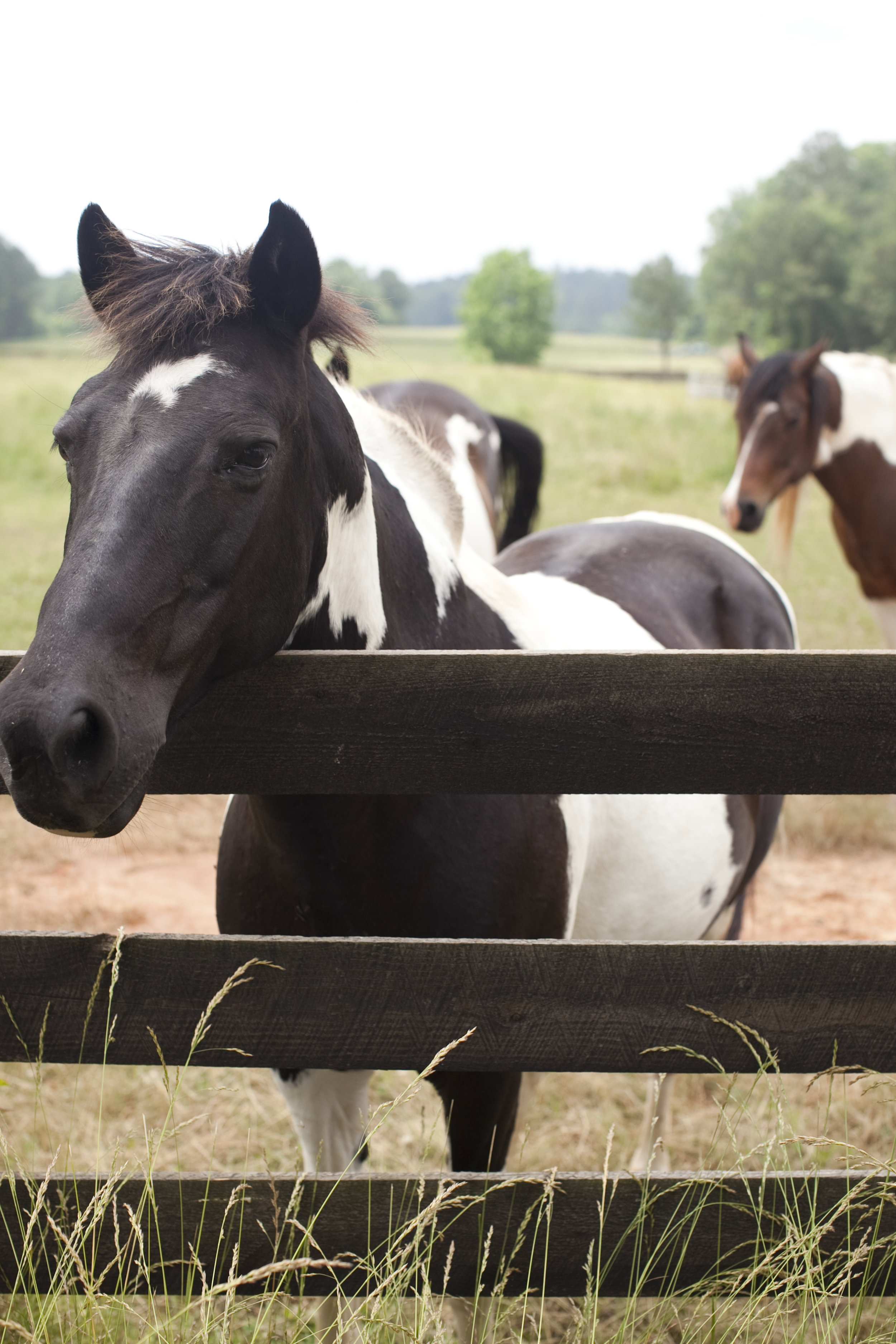 black and white horse / heirloomed