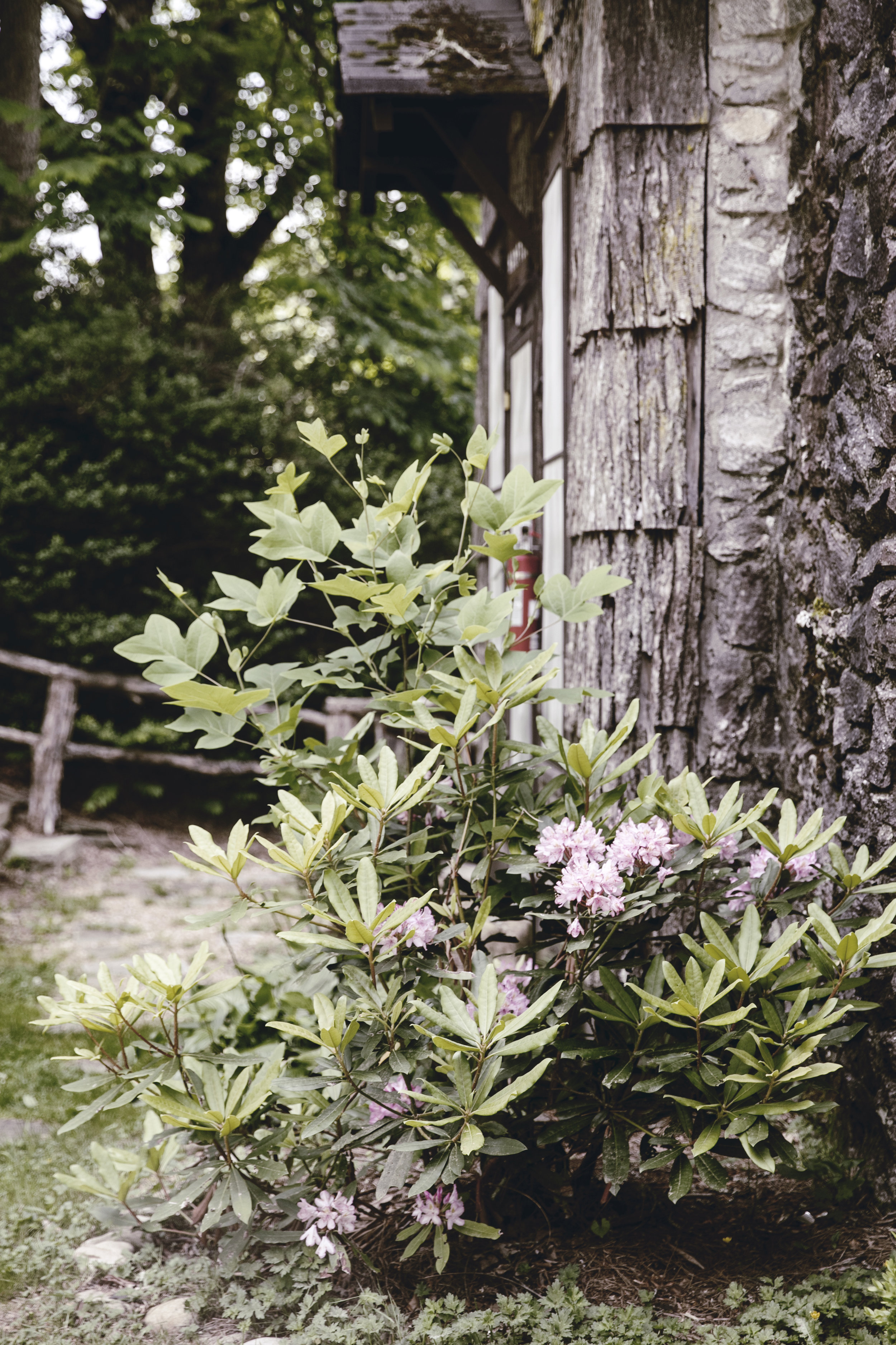 rustic mountain woodwork and flora fauna / heirloomed