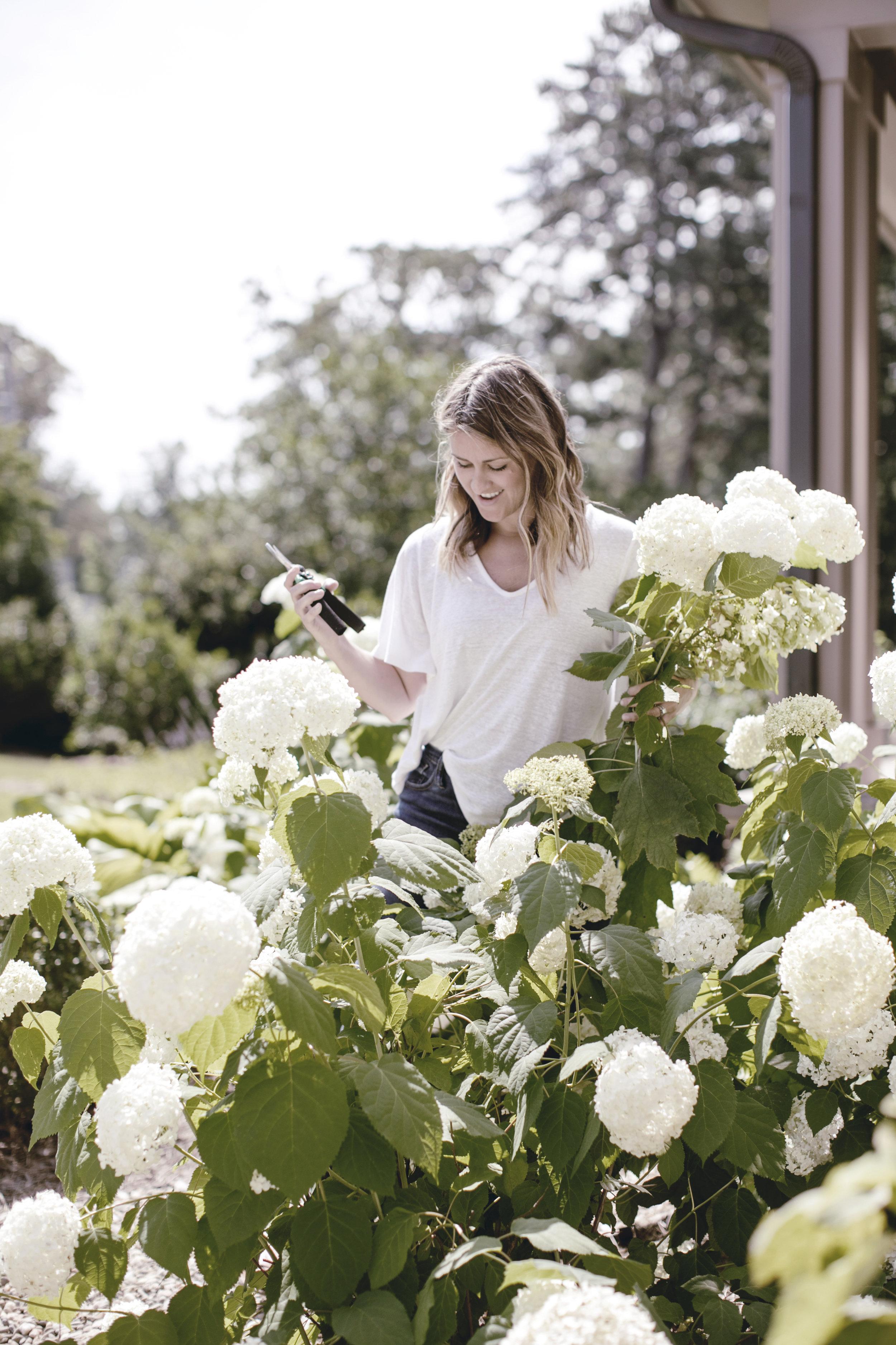 white hydrangeas / farmhouse garden / heirloomed