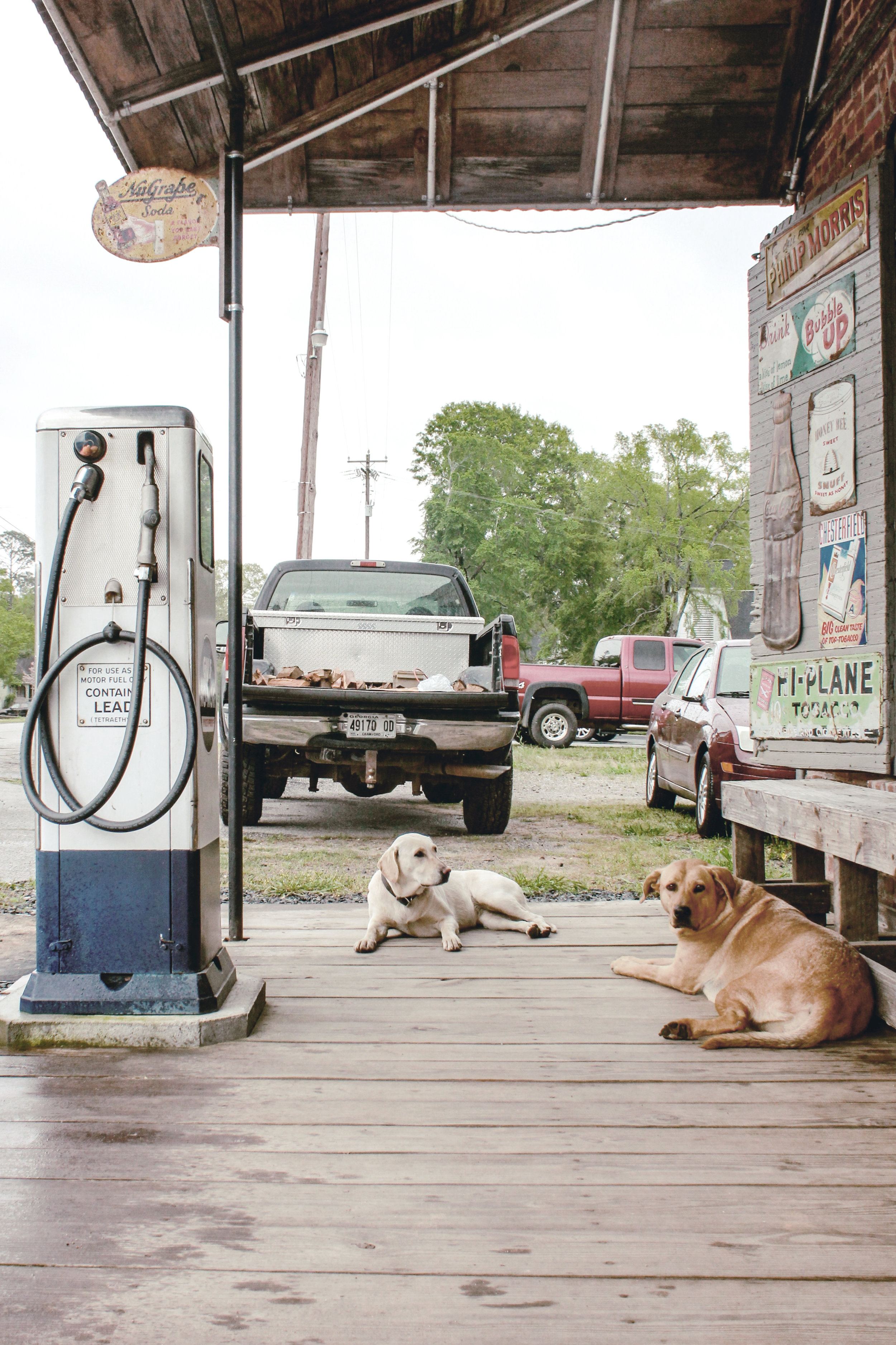 dogs on the porch of a country general store / heirloomed travel