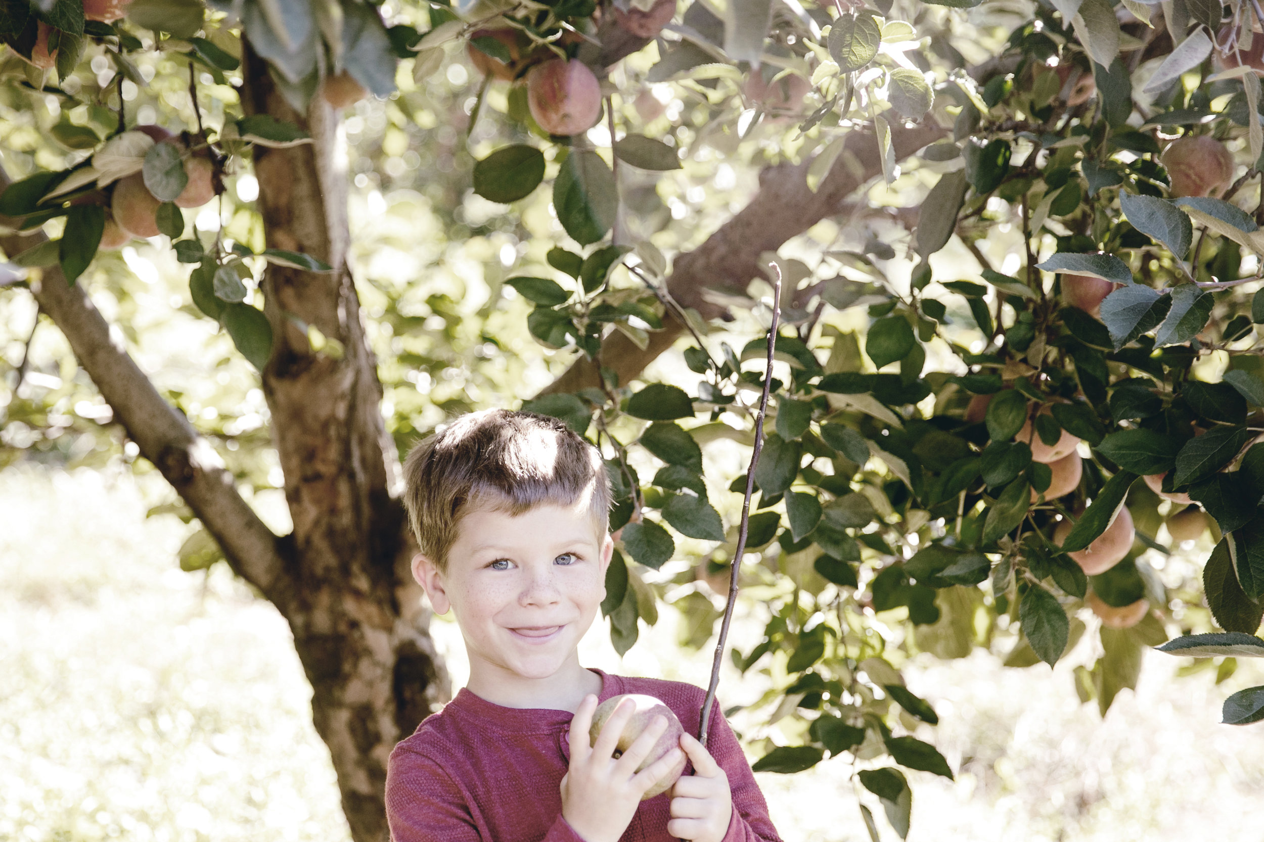 Apple picking / Fall Family Activities / heirloomed