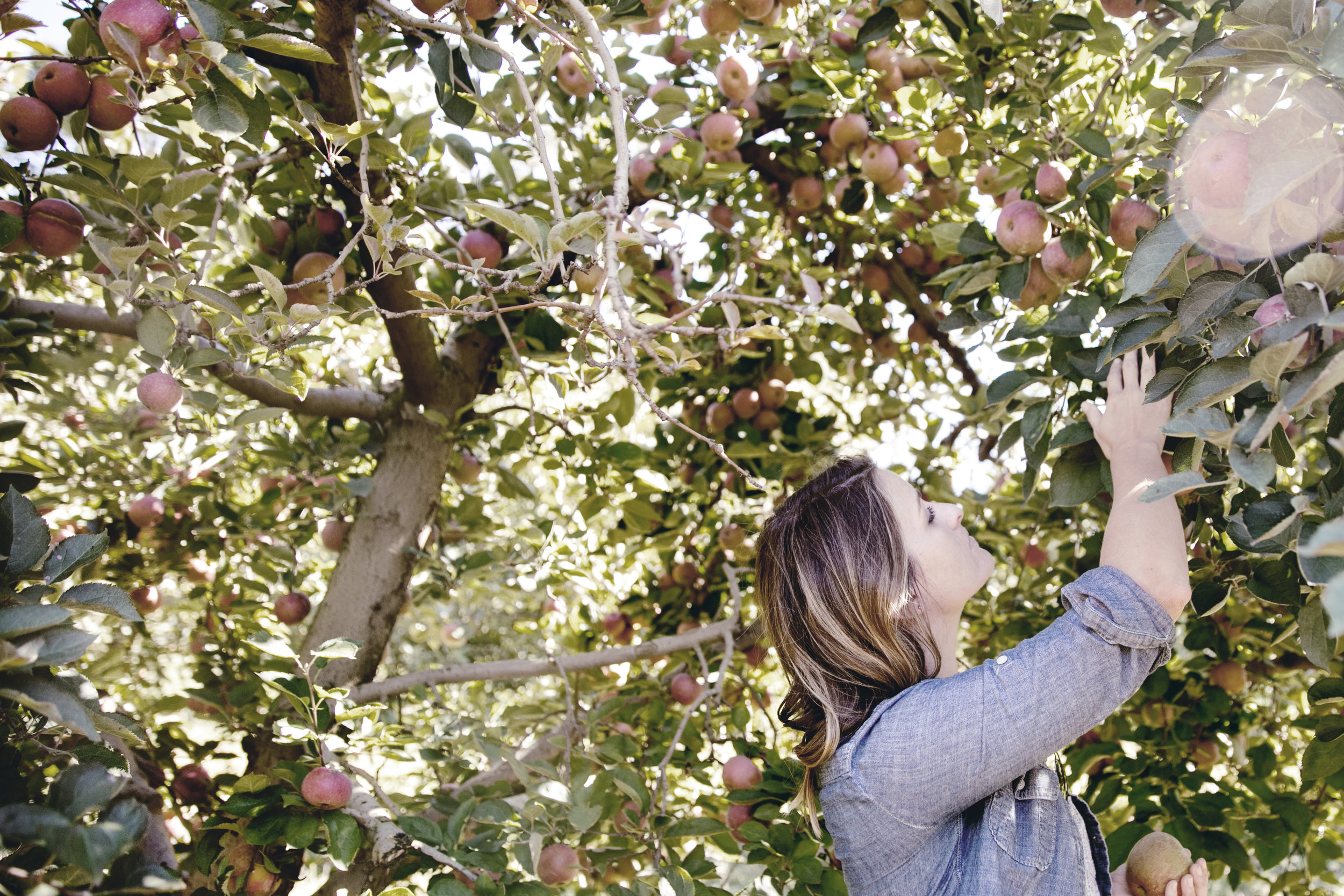 fall apple picking adventure / heirloomed