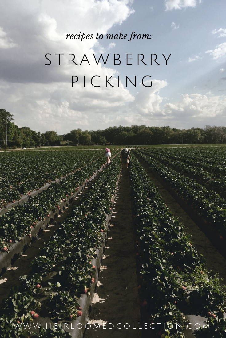 Strawberry Picking and Recipes by heirloomed