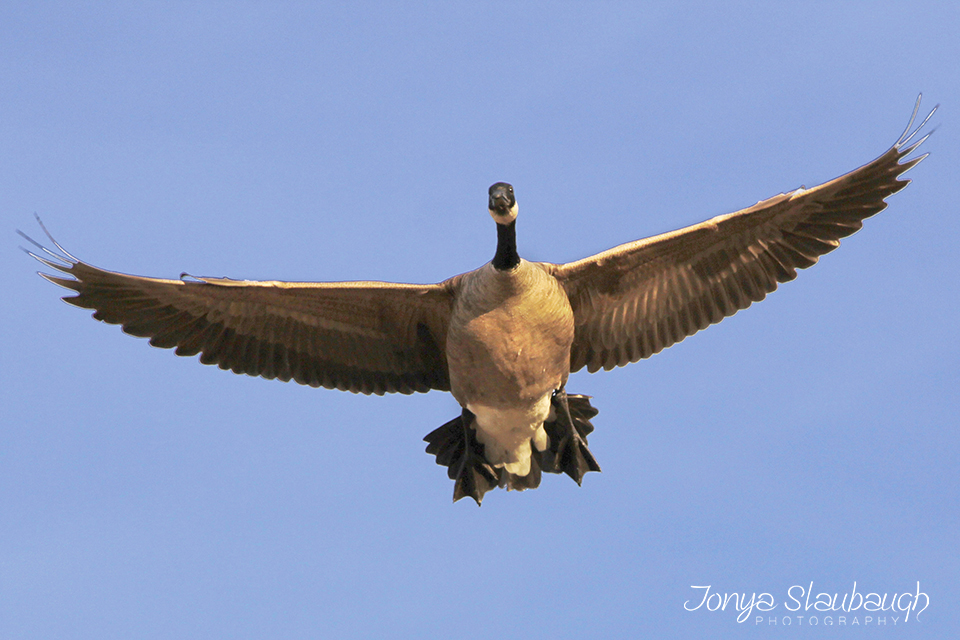 Duck8.jpg
