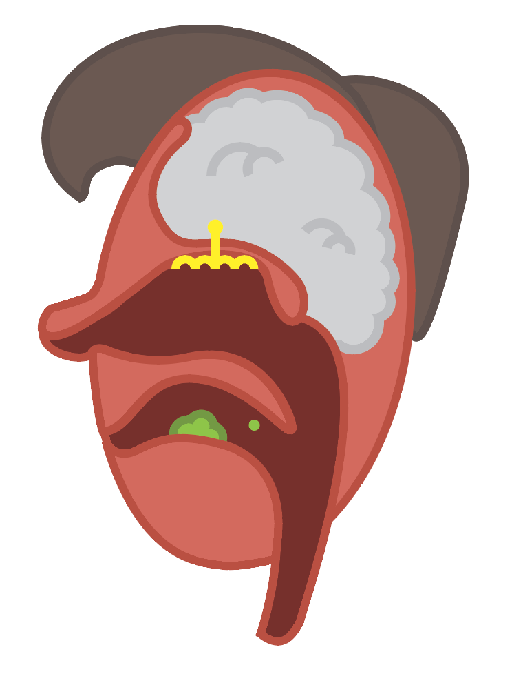 Second attempt at illustrating how vapor particles move through the retro nasal canal into the olfactory cells. The profile approach was helpful because viewers had a better sense of the path that vapor particles take as they move from the mouth to the olfactory cells.