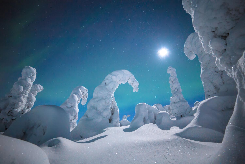 forest_lapland_winter-3.jpg