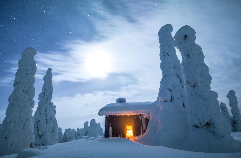 forest_lapland_winter.jpg