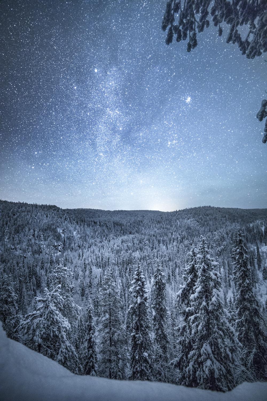 forest_lapland_winter-16.jpg