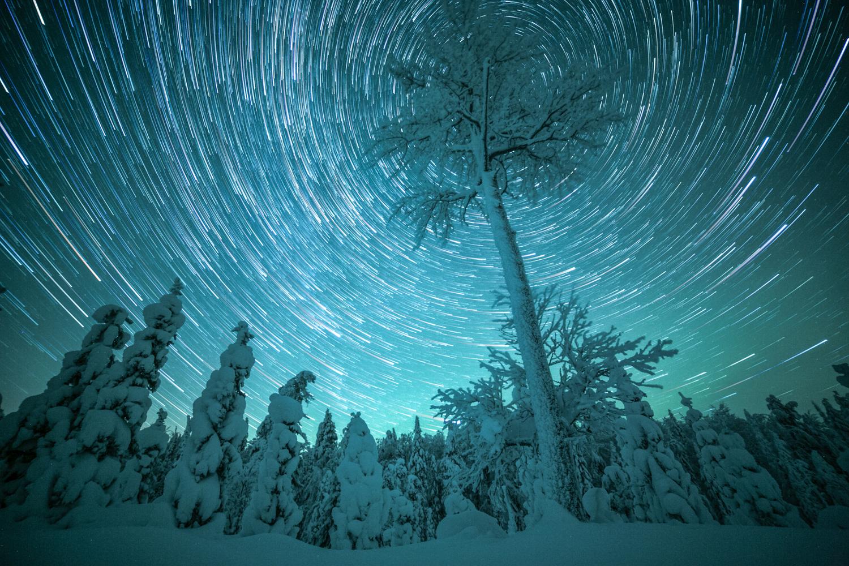 forest_lapland_winter-20.jpg