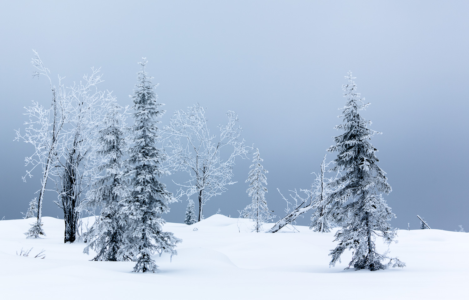 winter_day_lapland-149.jpg