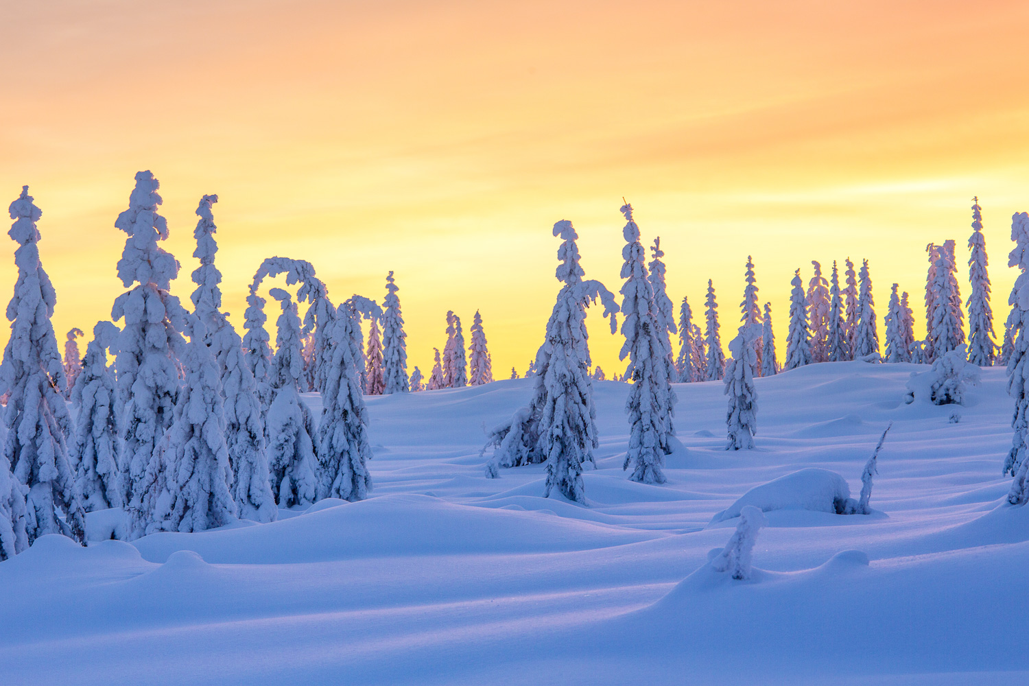 winter_day_lapland-85.jpg