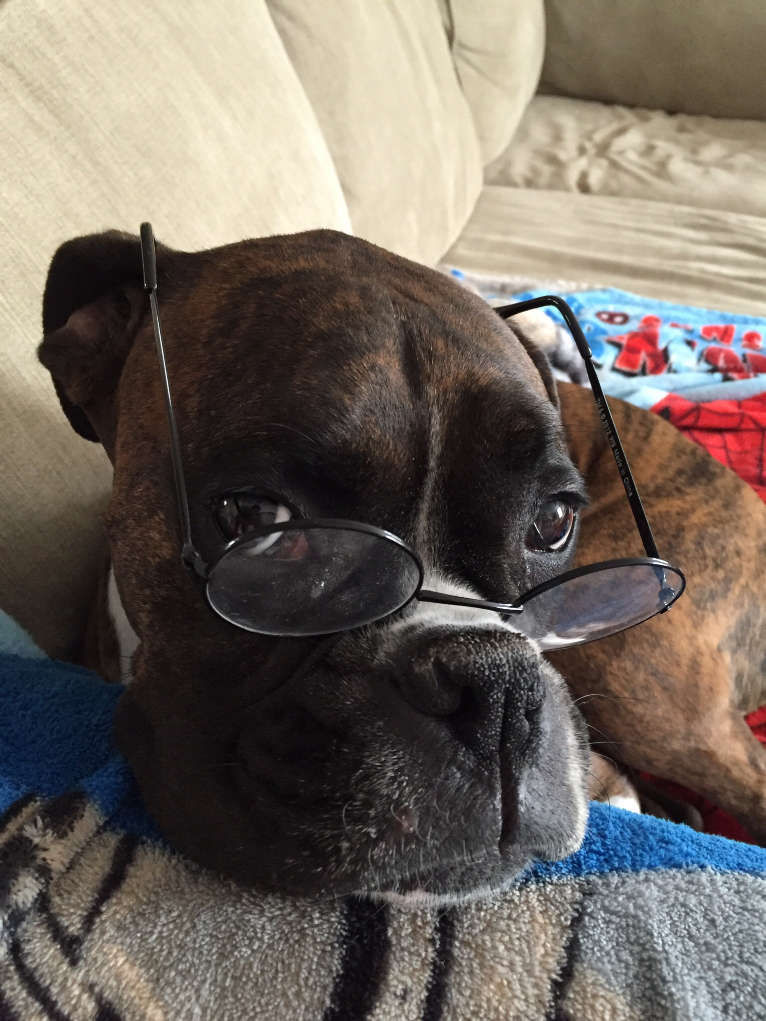 Lola te está juzgando.