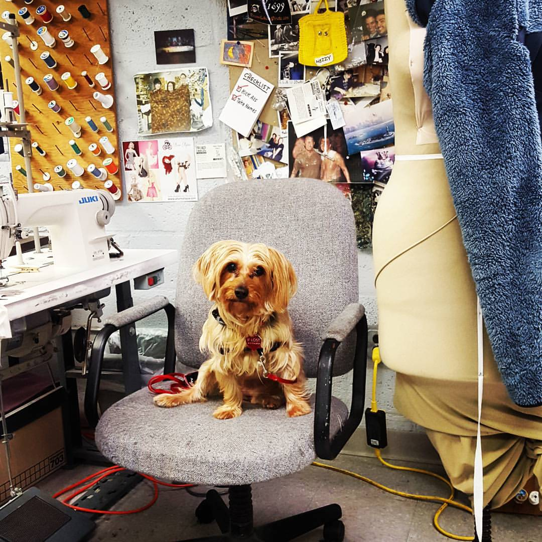 A visit to the Costume Shop with Lola the Wonder Pooch.
