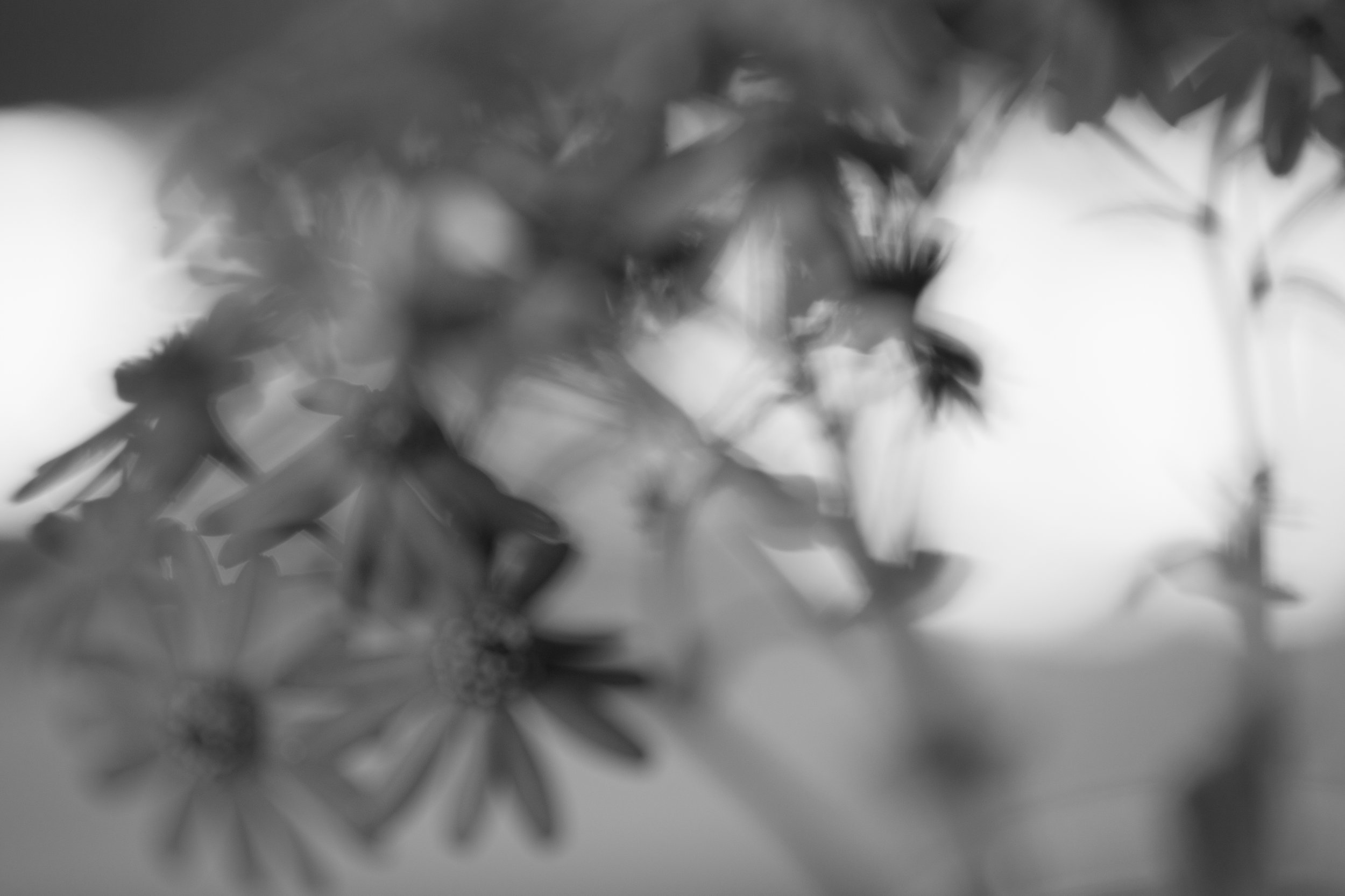 flowerblurrybnw.jpg