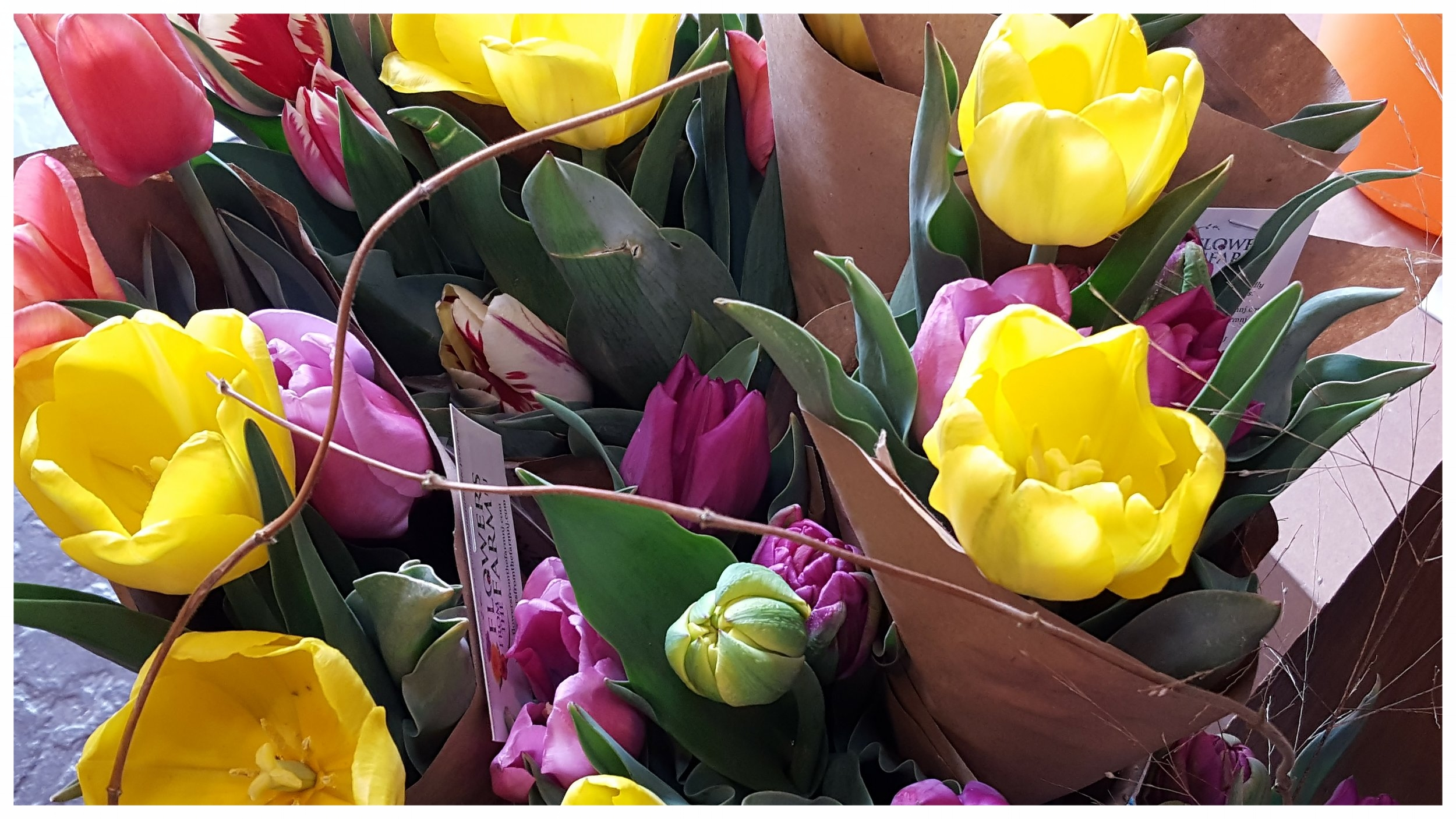 Tulips are such a delight after the long days of winter