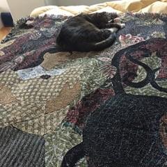 Chloe on bed in NM.jpg