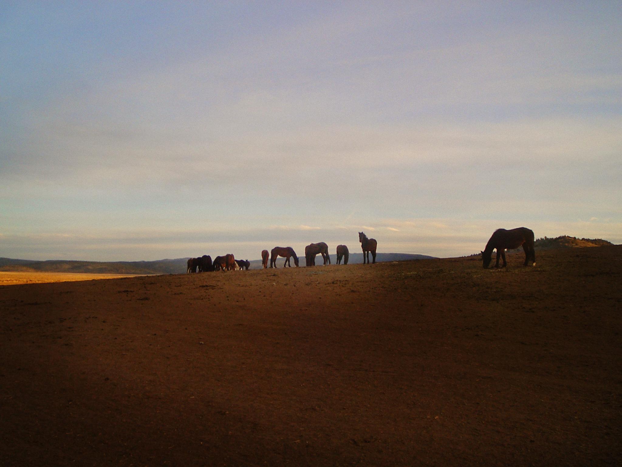 horseshill.jpg