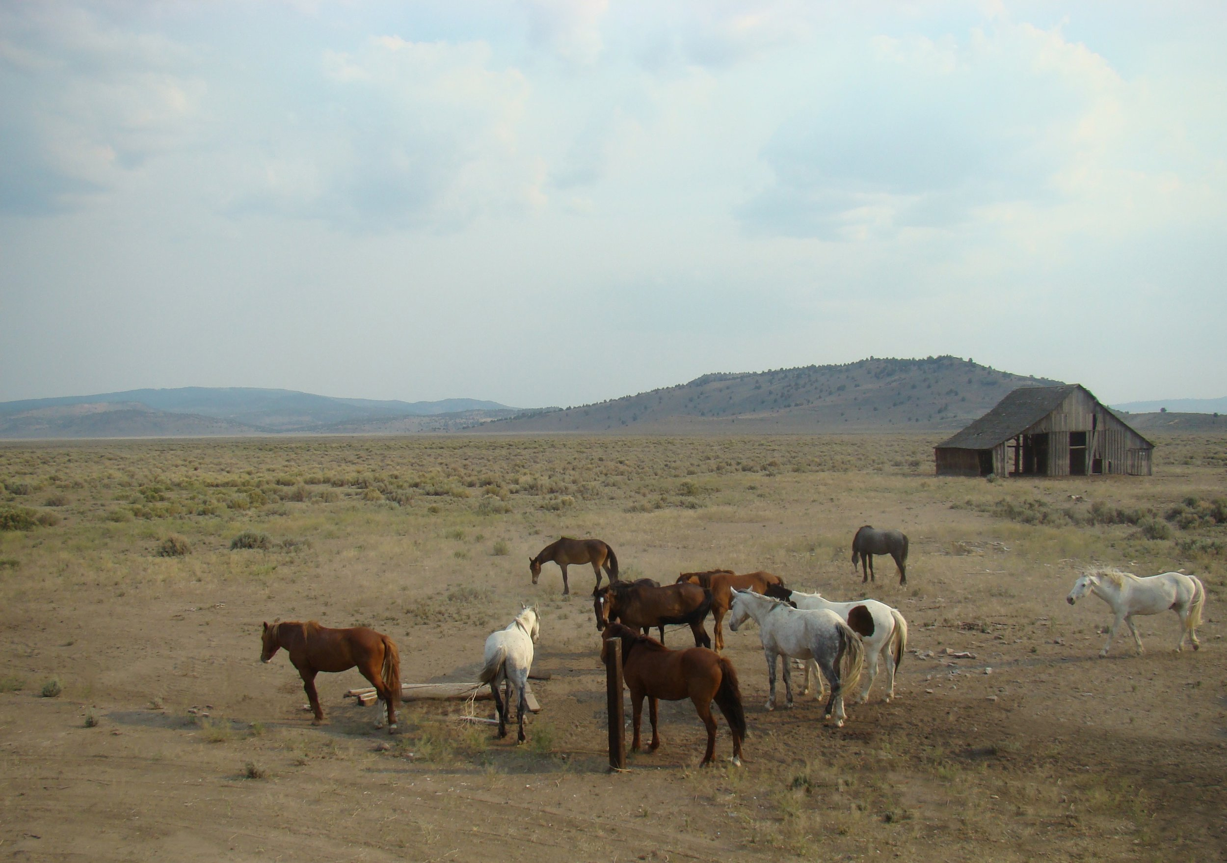 stallions1.jpg