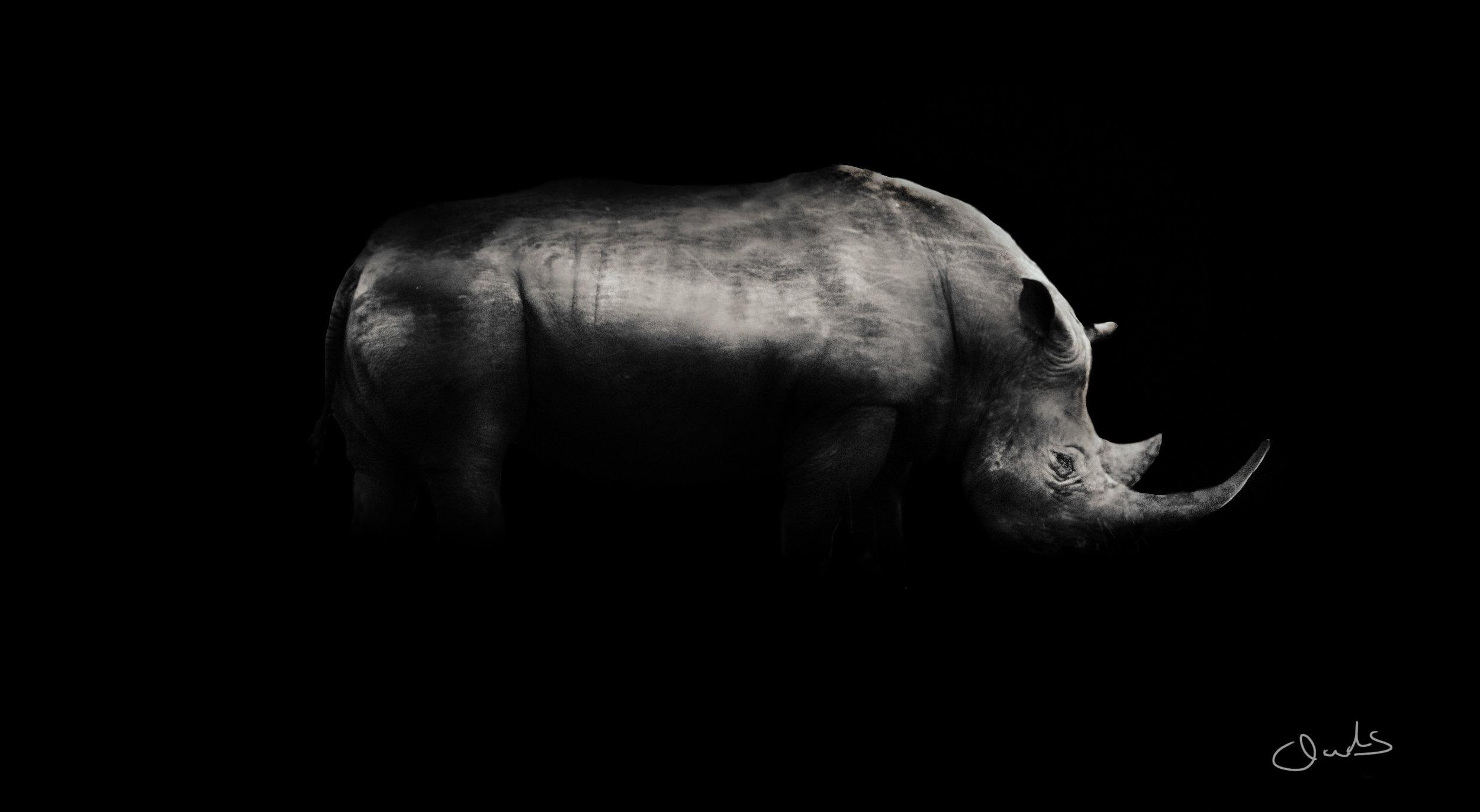 Rhino, SA on the brink of extinction