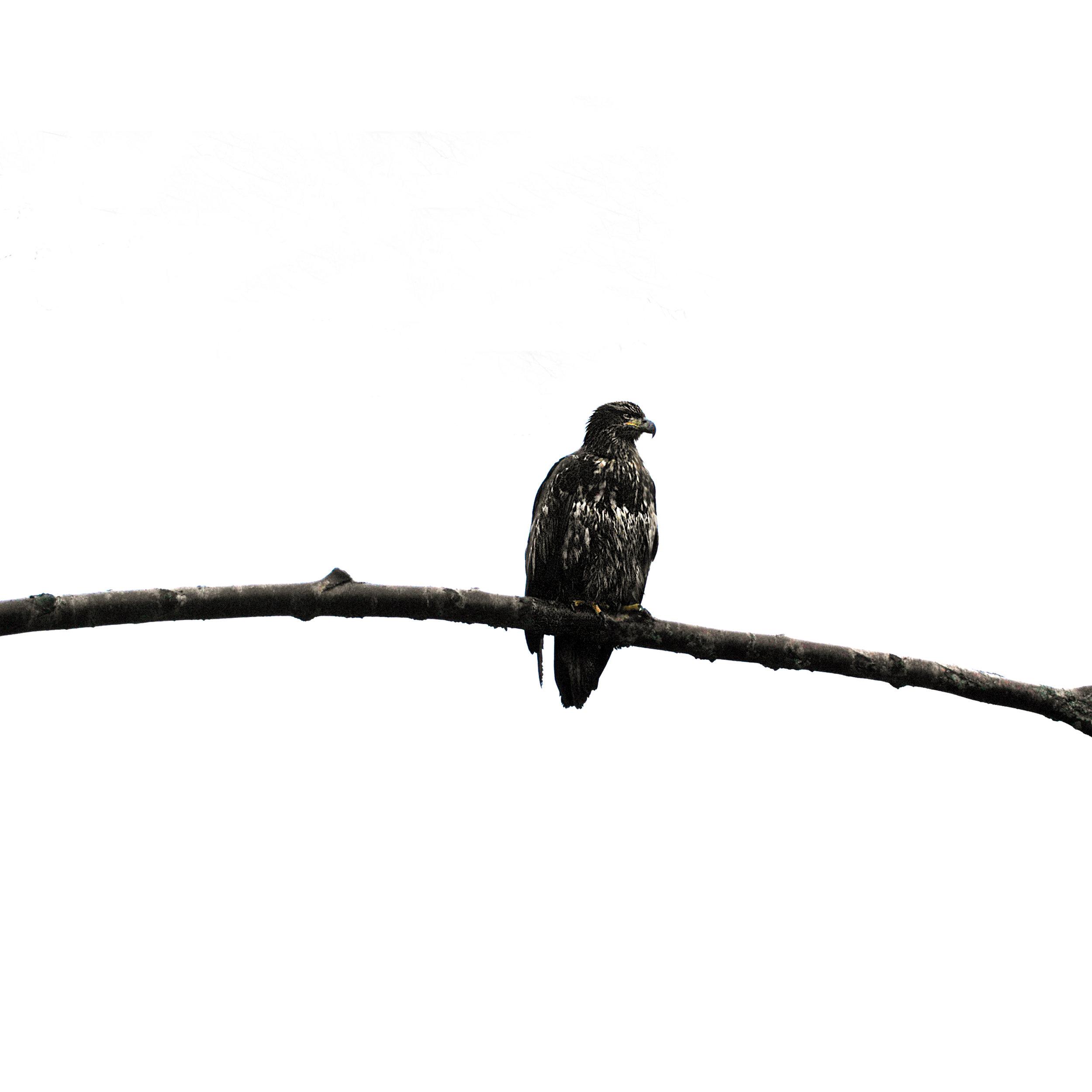 eagleone.jpg
