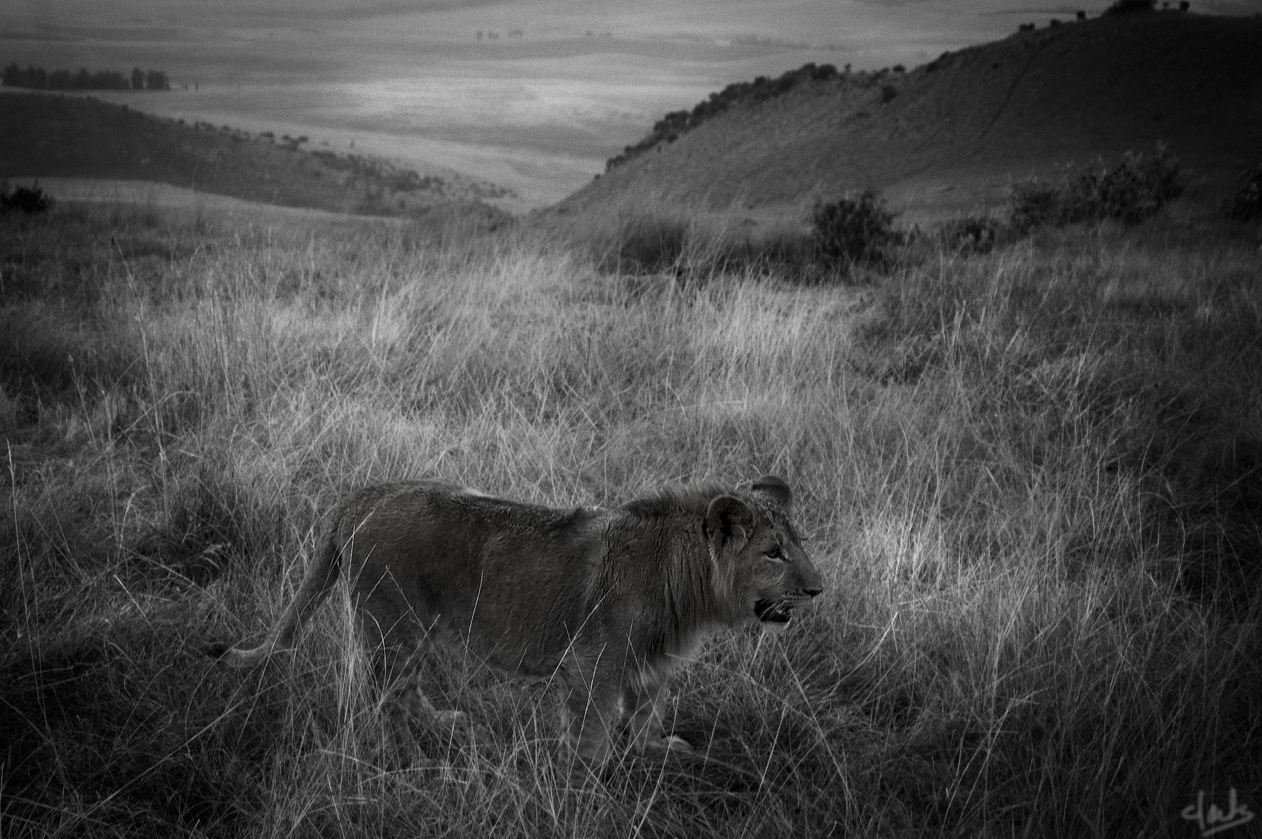 lionsday.jpg