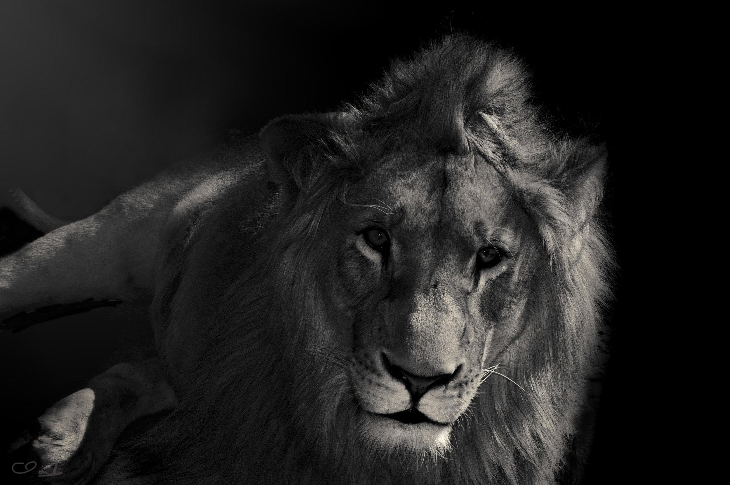 Kelan, SA, love lions alive sanctuary