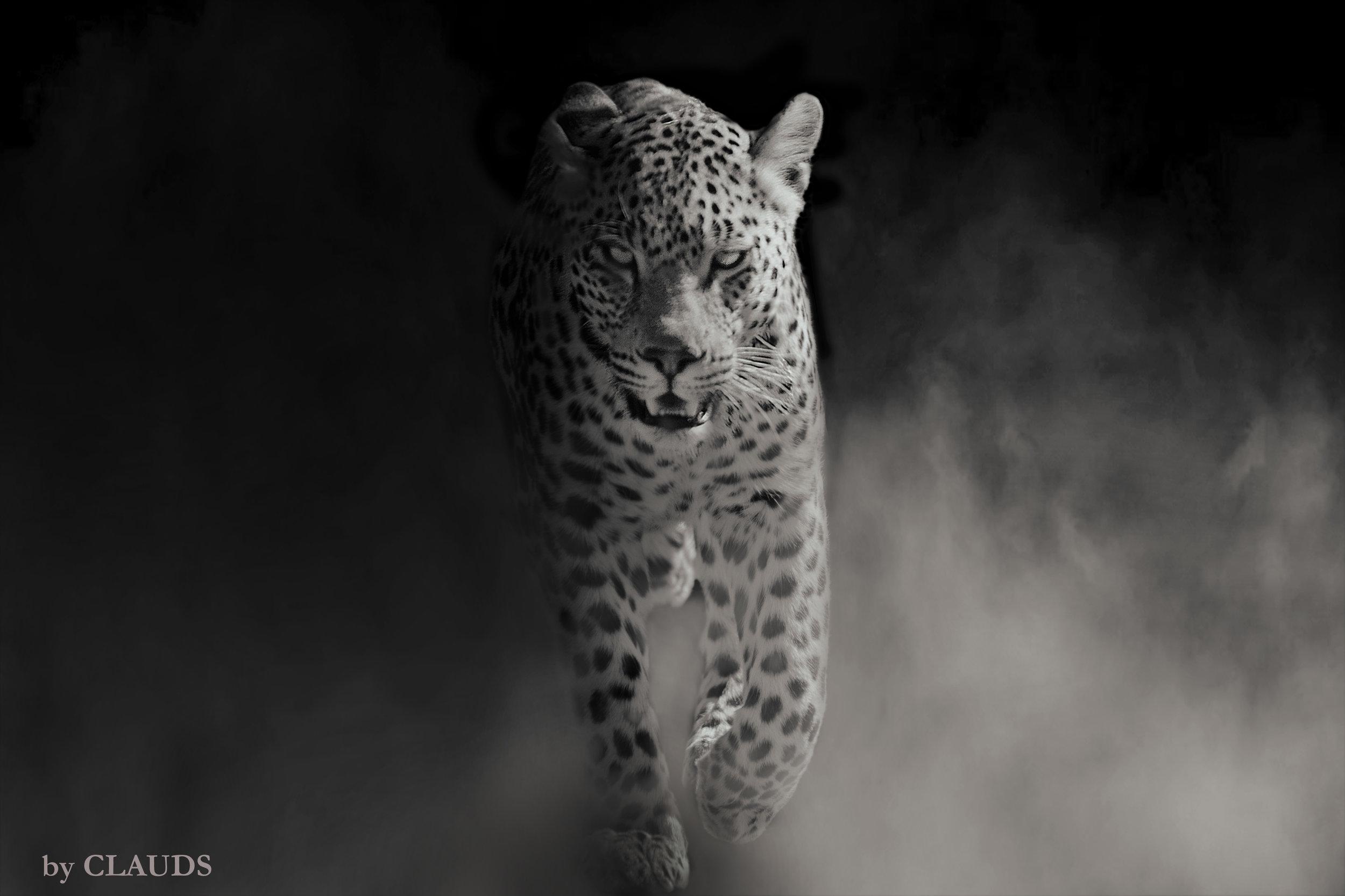 Leopard, SA, 2017