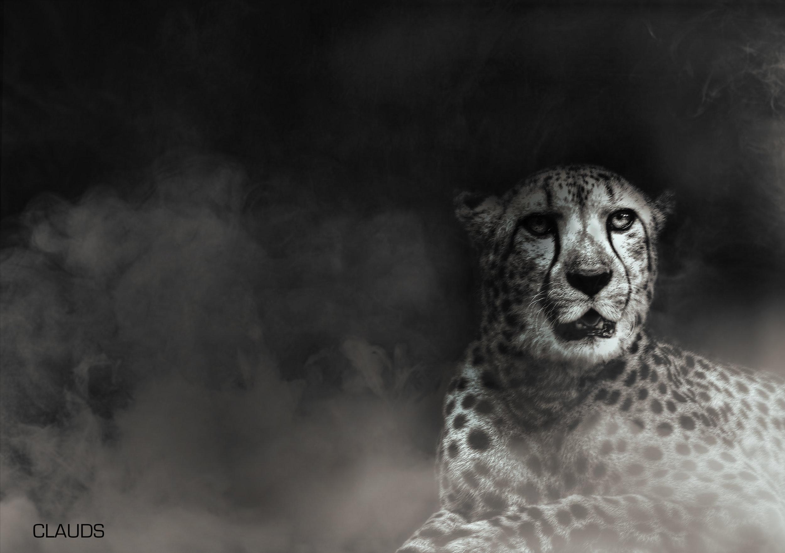 cheetahfog.jpg