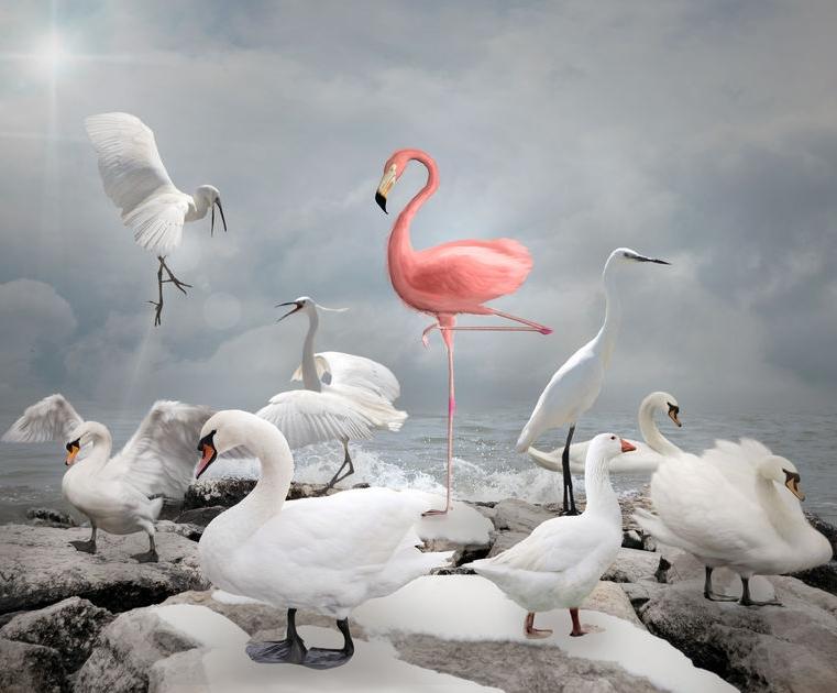 FlamingoStandOut