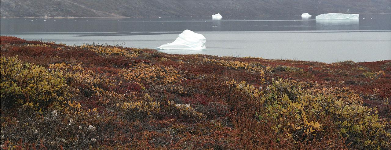 1280px-Greenland-tundra(js)1.jpg