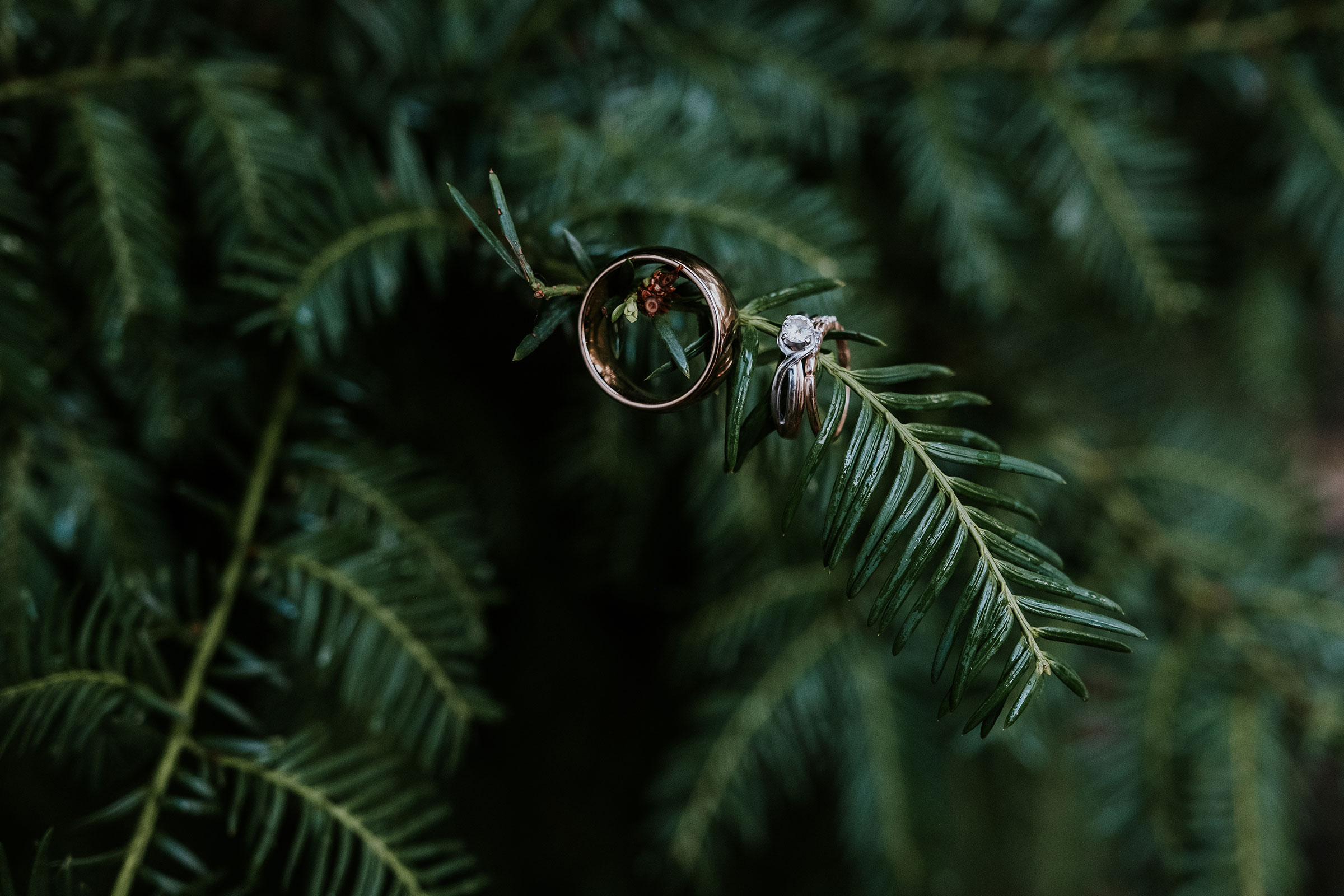 wedding-couple-rings-iowa-state-fairgrounds-desmoines-iowa-raelyn-ramey-photography.jpg