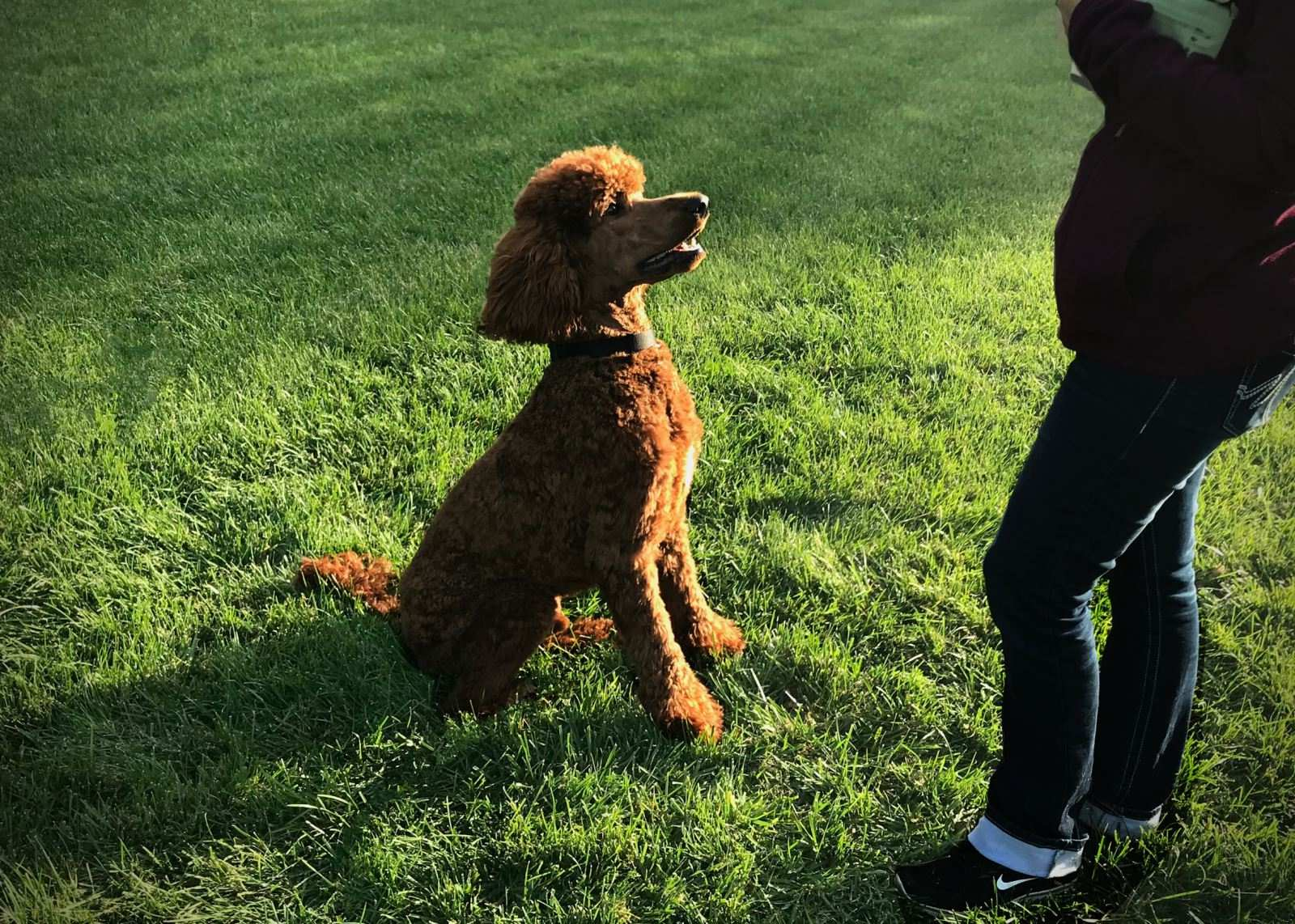 Our Goal — Dry Creek Poodles