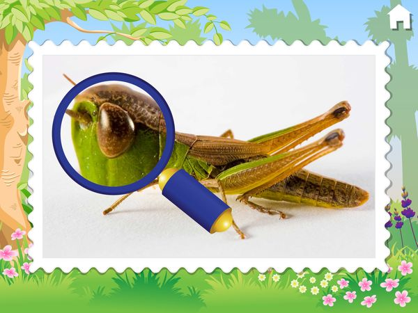 Kids also learn about bugs through high-resolution macro photos and documentary clips of insects in nature