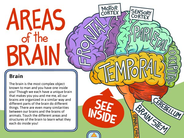 The app includes three diagrams that highlights different topics in neuroscience.