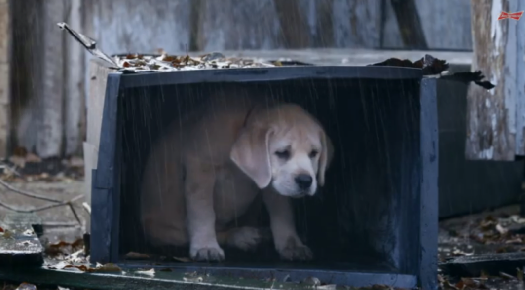 Budweiser's  Lost Puppy Ad  Captured Hearts and Metrics.