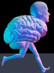 Brain, Body, & Environment