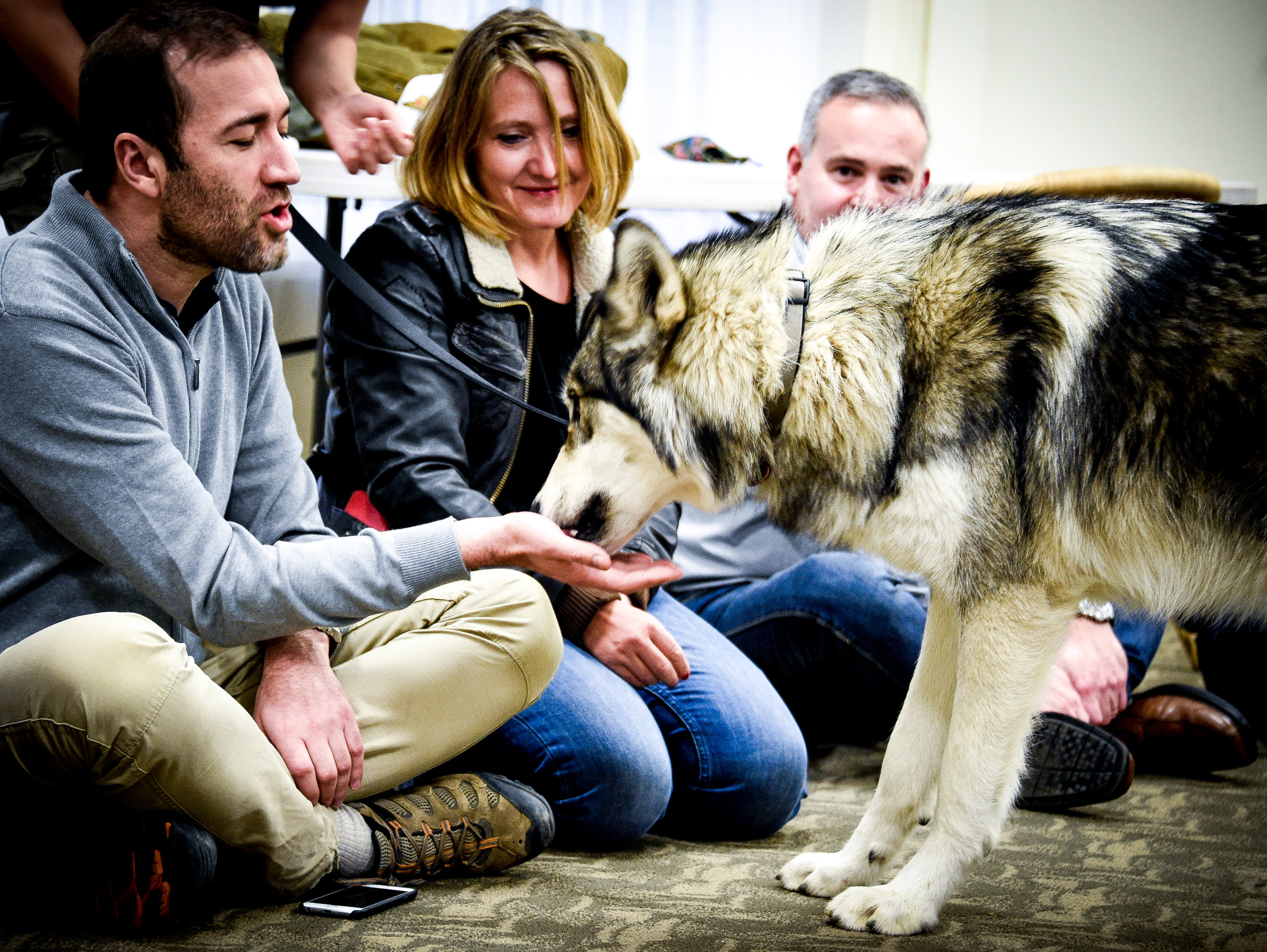 Wolf Wisdom -