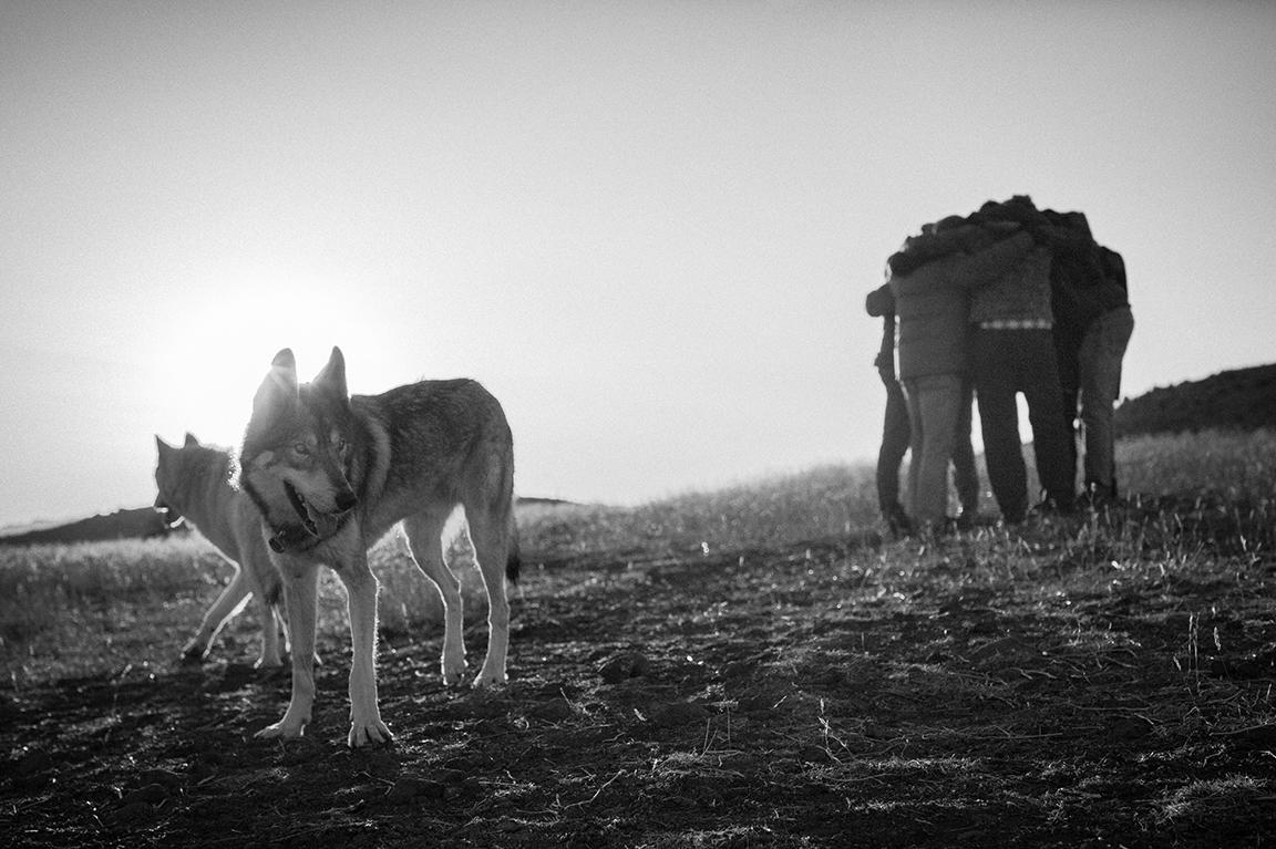wolf 15.jpg