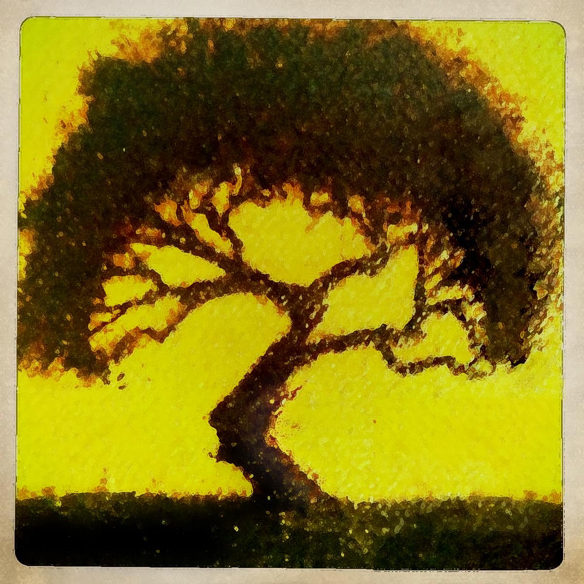 little tree.jpg