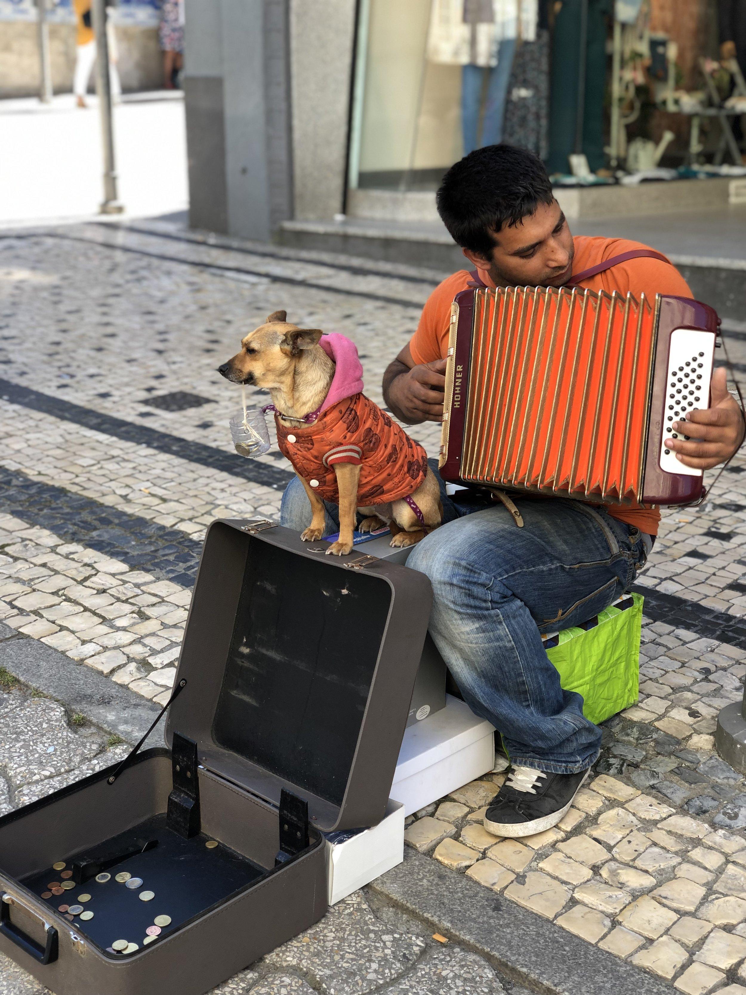 street-pup-porto.jpg