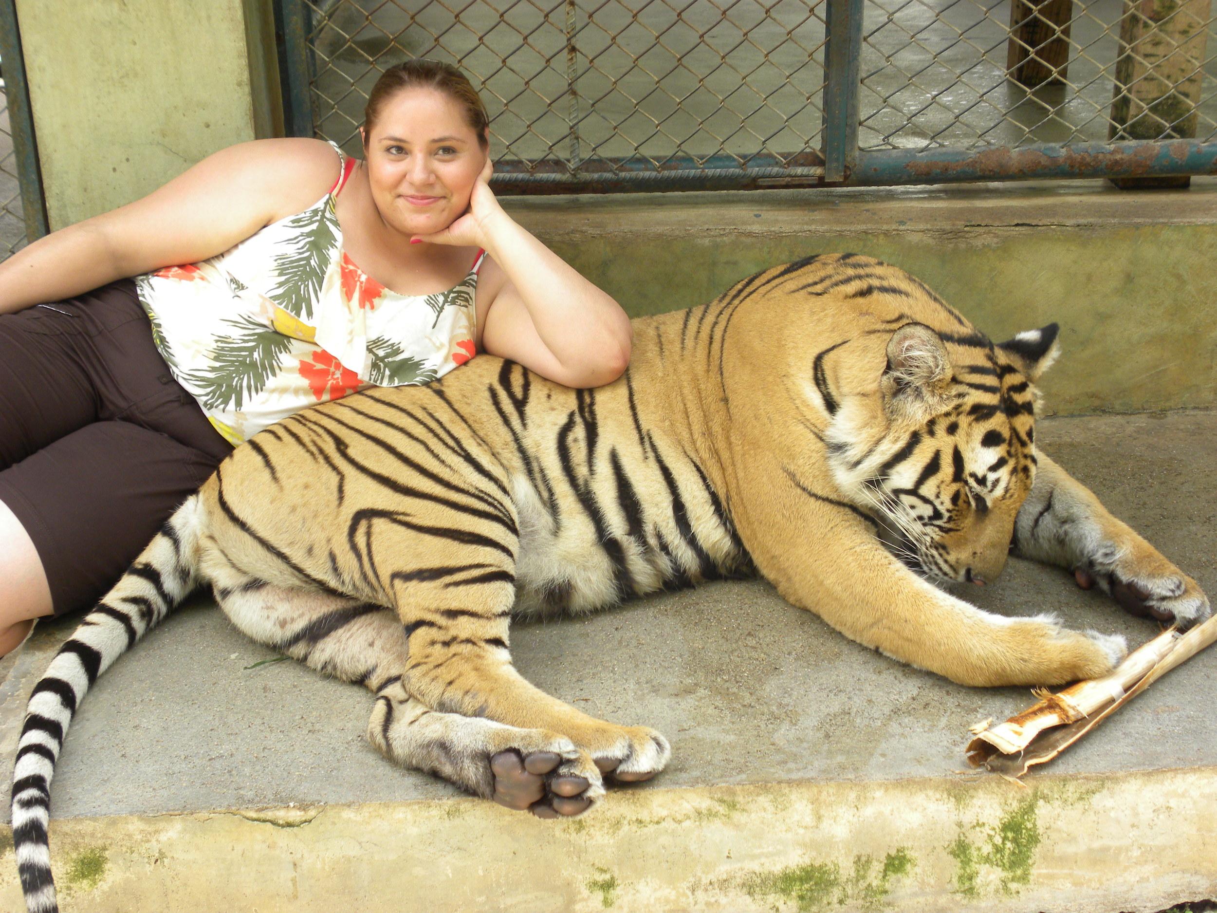Tiger Kingdom, Chiangmai, Thailand