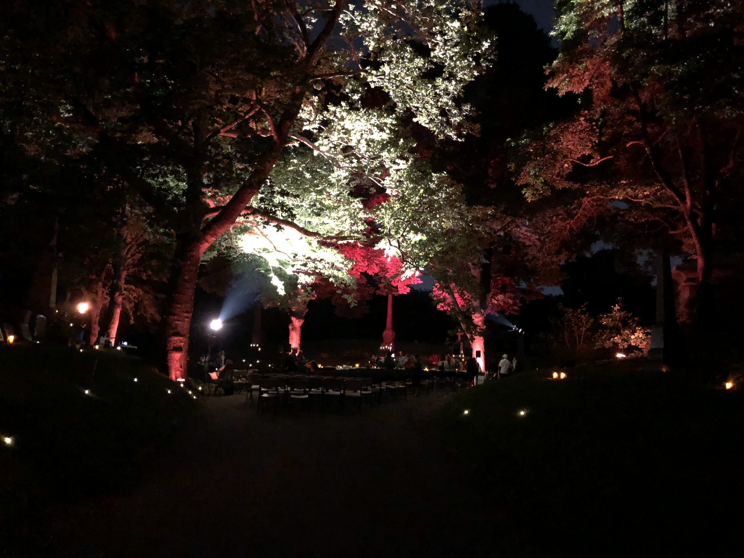 Creating atmosphere with lighting in tree canopies