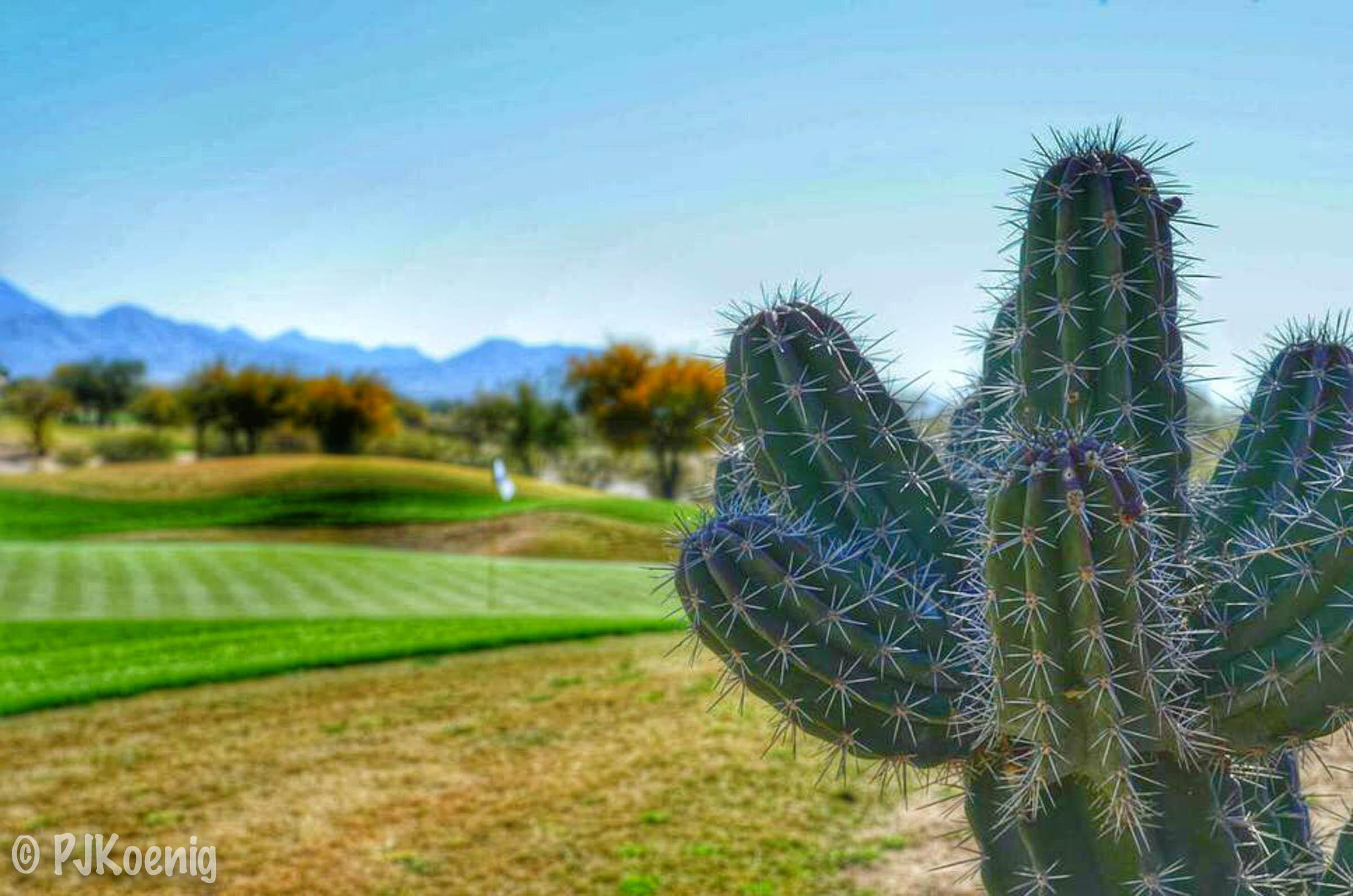 TPC Scottsdale - Scottsdale, AZ