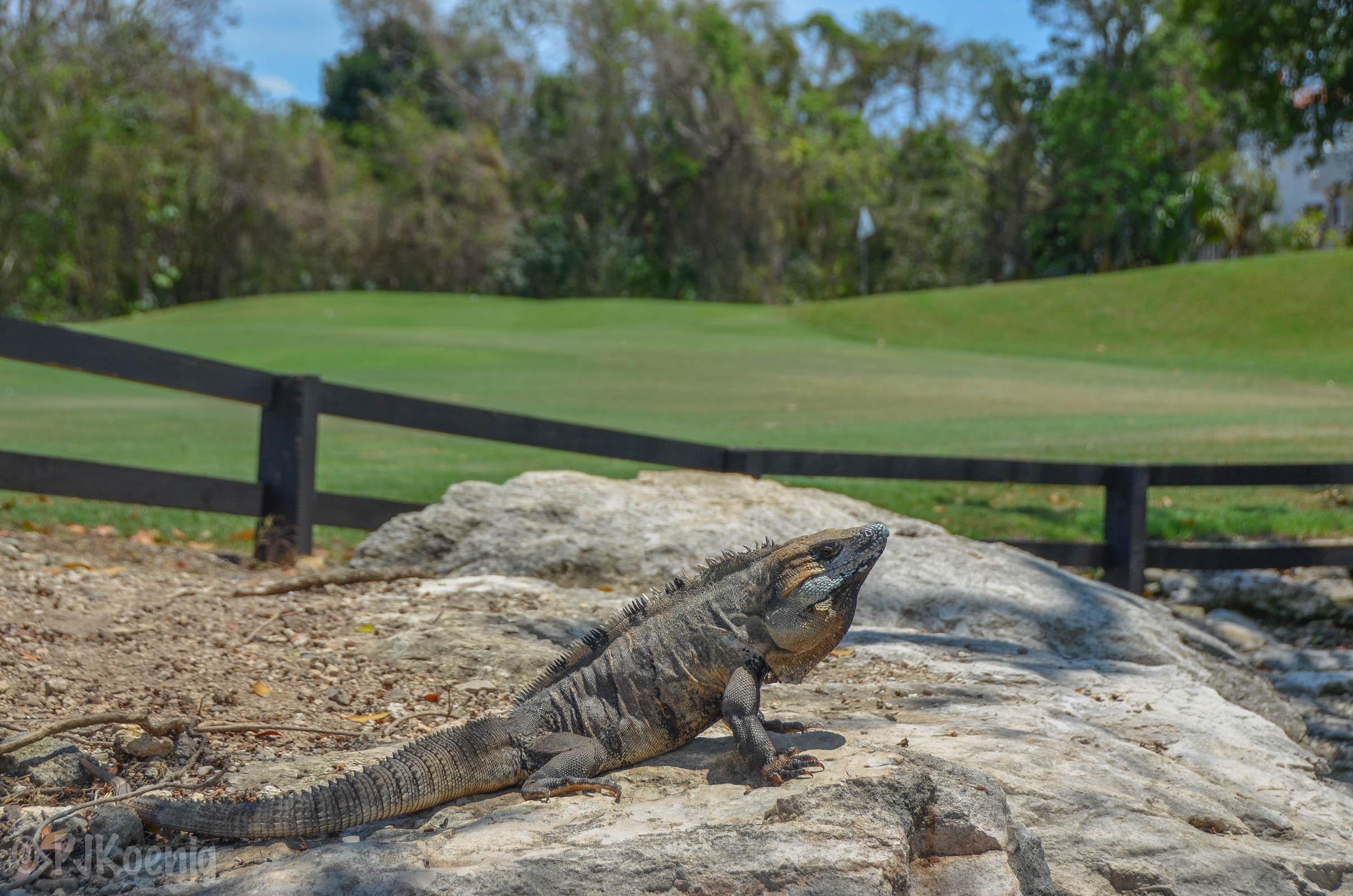 Hard Rock Golf Club - Playa Del Carmen, MX