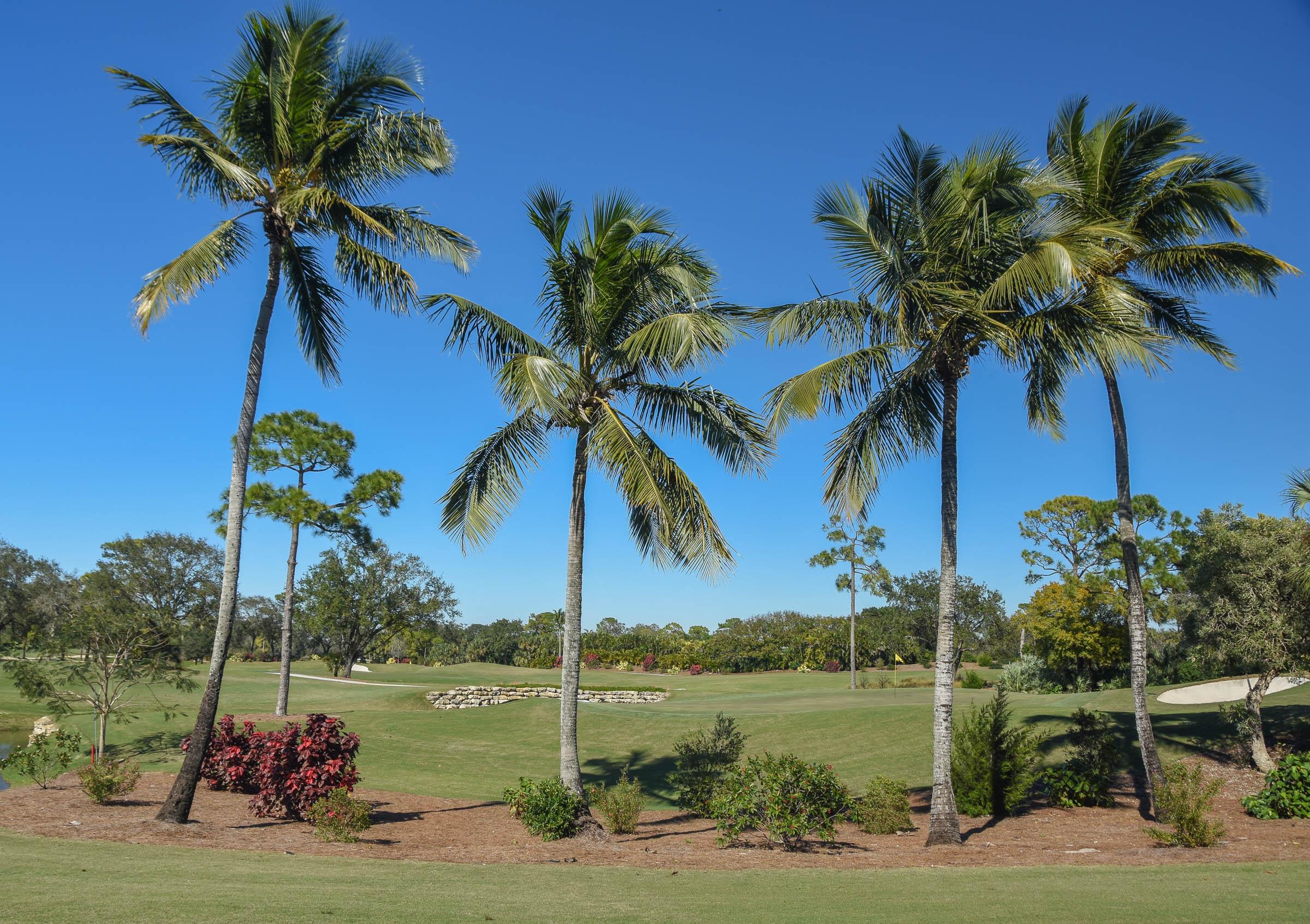 Adios Golf Club1-34.jpg