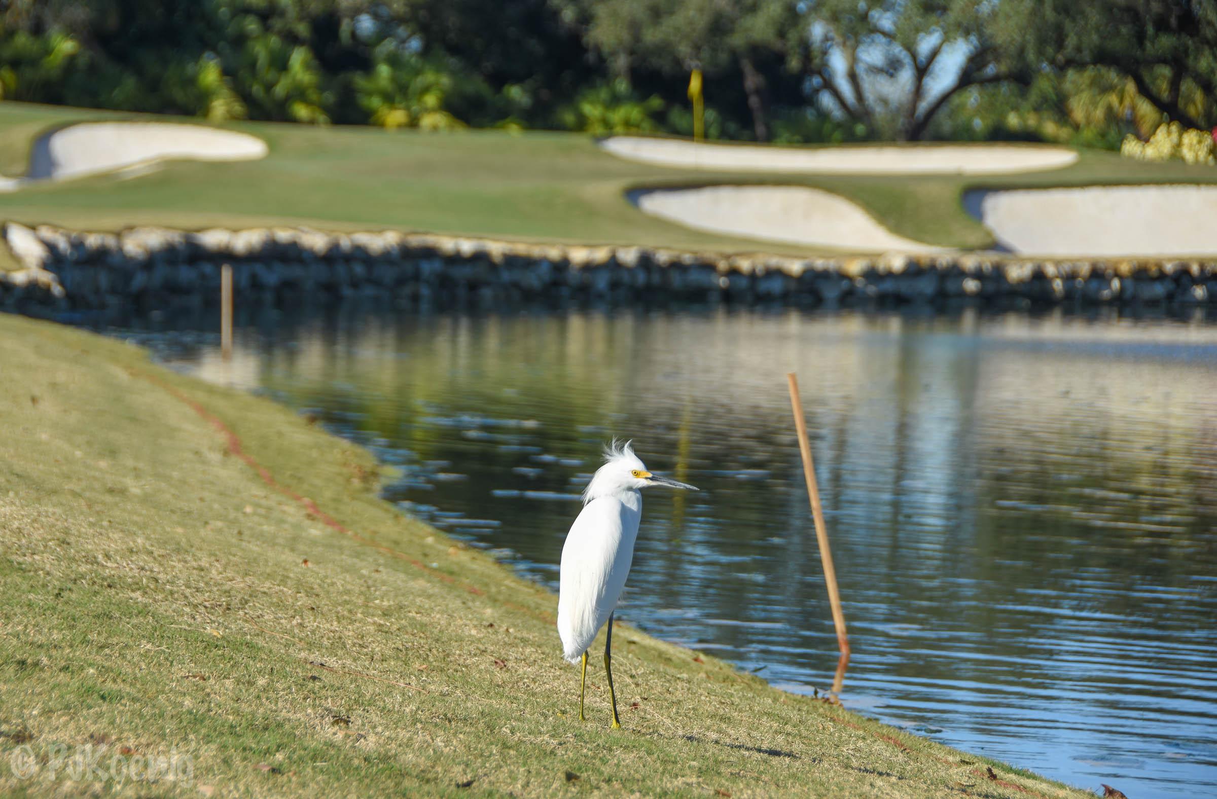 Adios Golf Club1-59.jpg