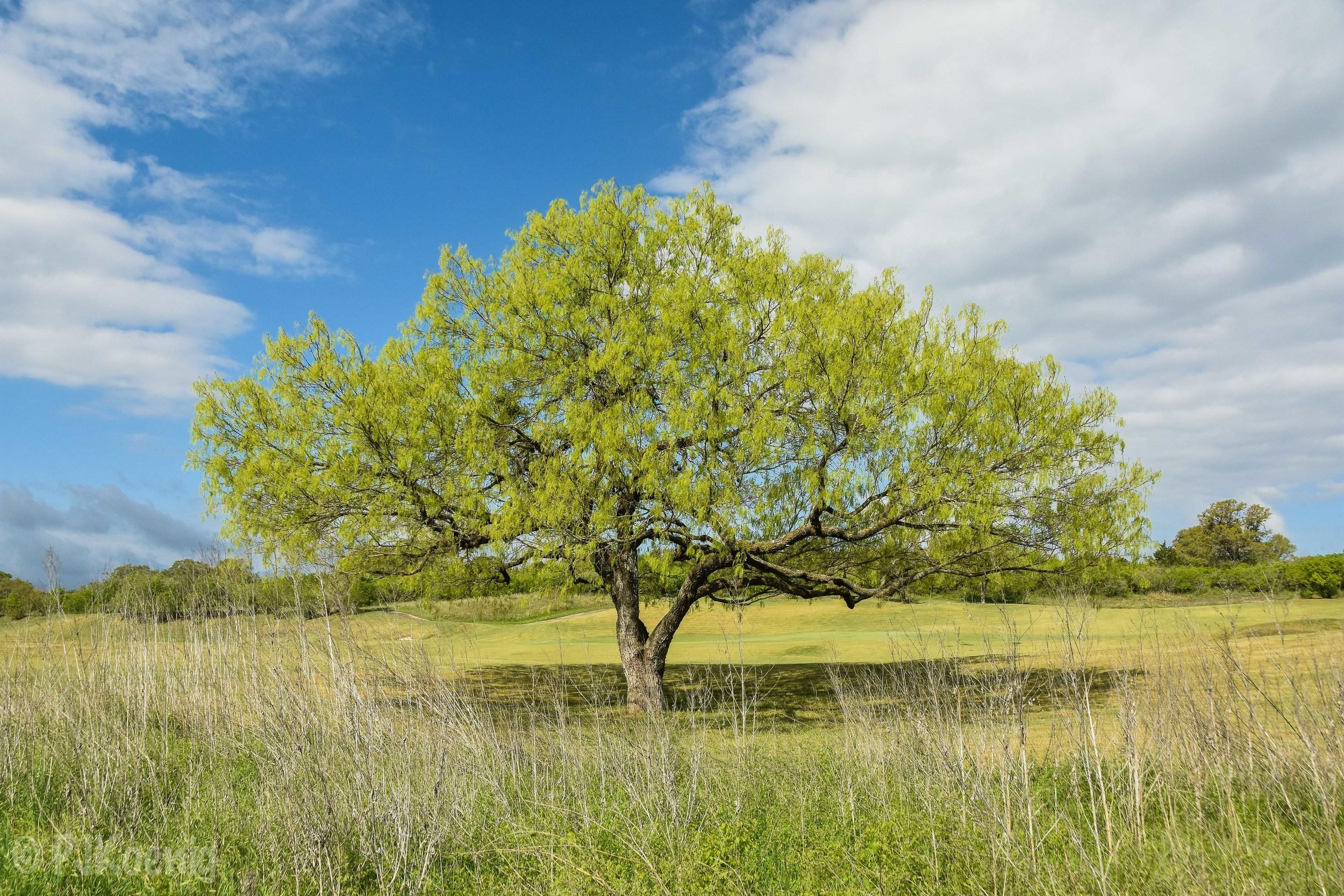 Briggs Ranch1-16.jpg