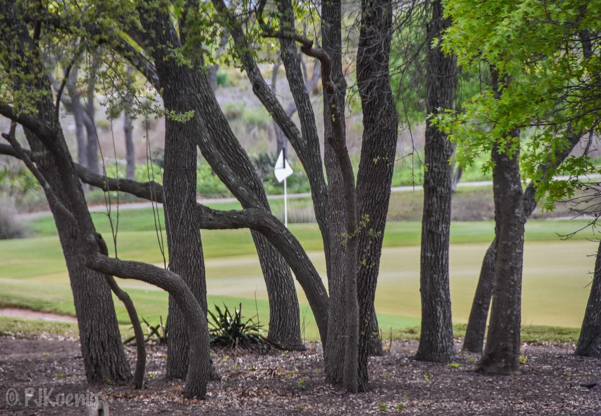 Spanish Oaks1-55.jpg